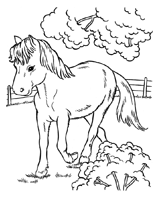 horse color sheets for kids