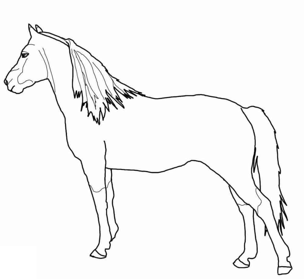 horse color sheets free