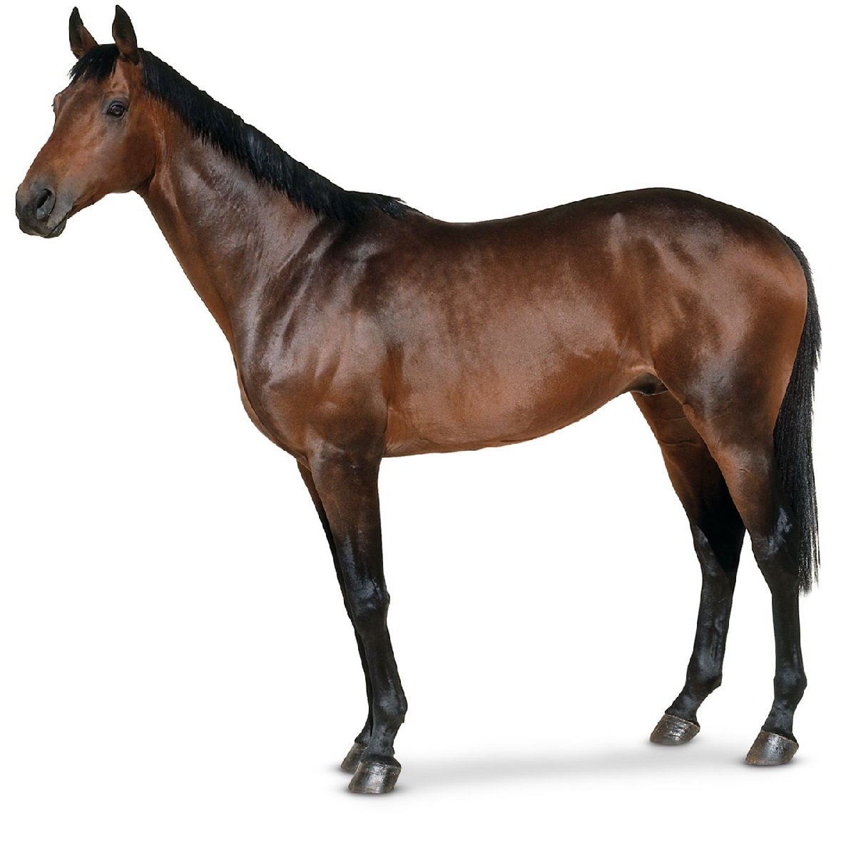 pictures of horse for kids real