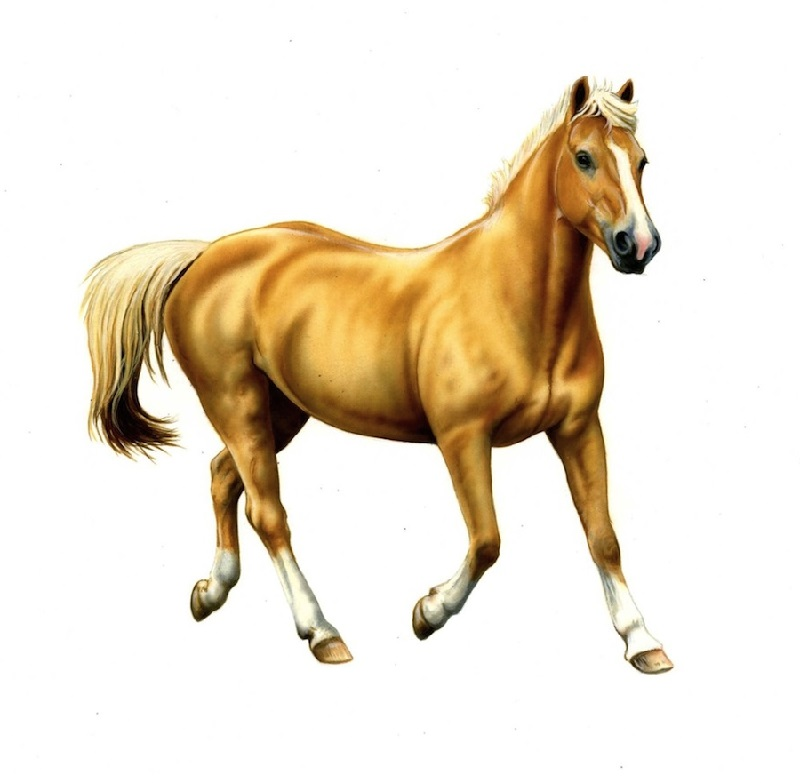 pictures of horse for kids to print