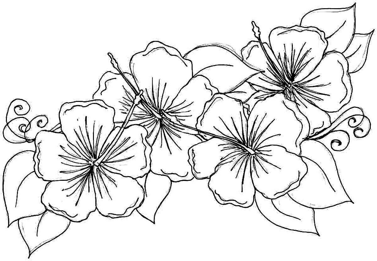 Toddler Coloring Pages Flowers