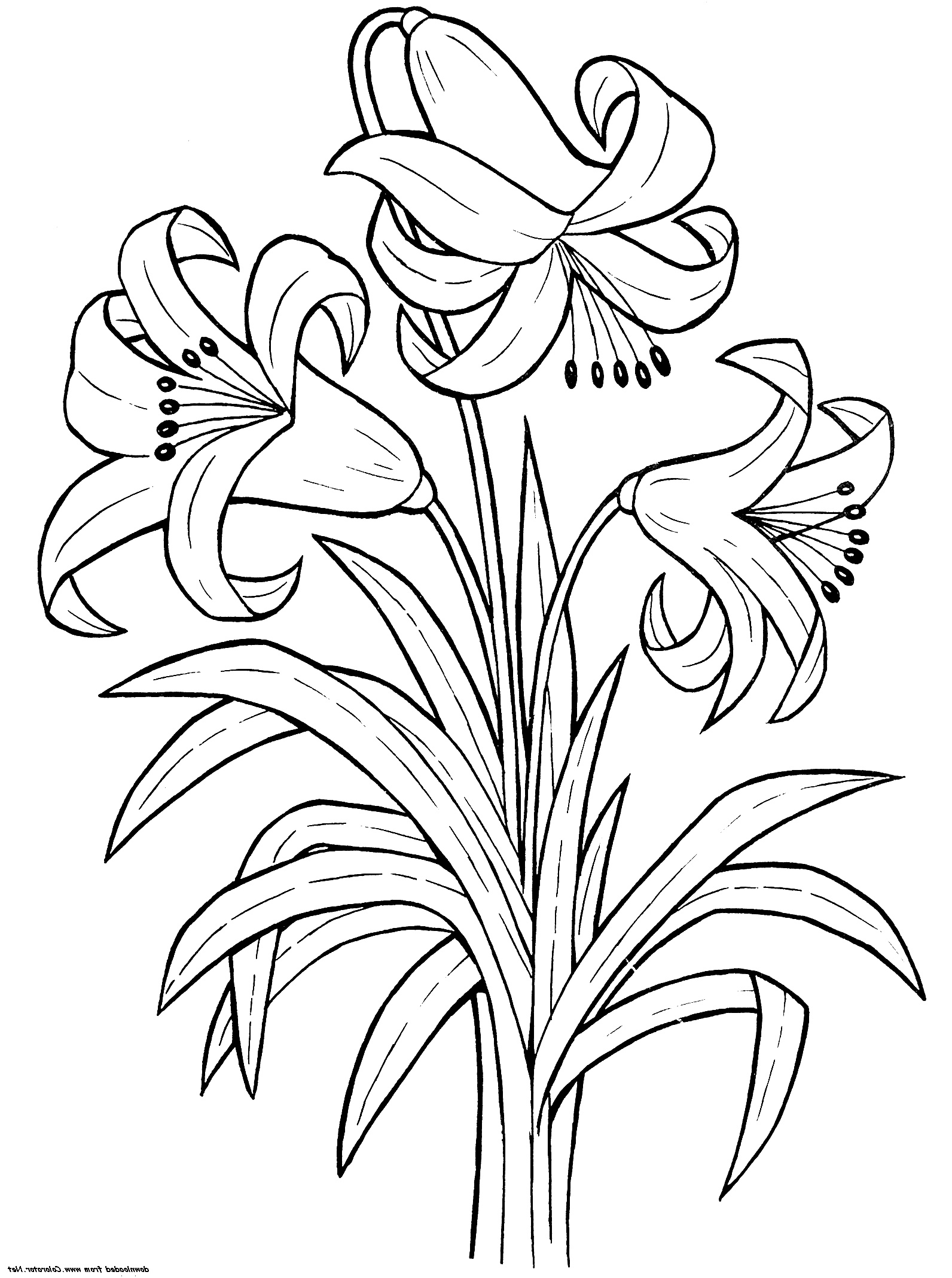 Flower-Coloring-Pages-Lily