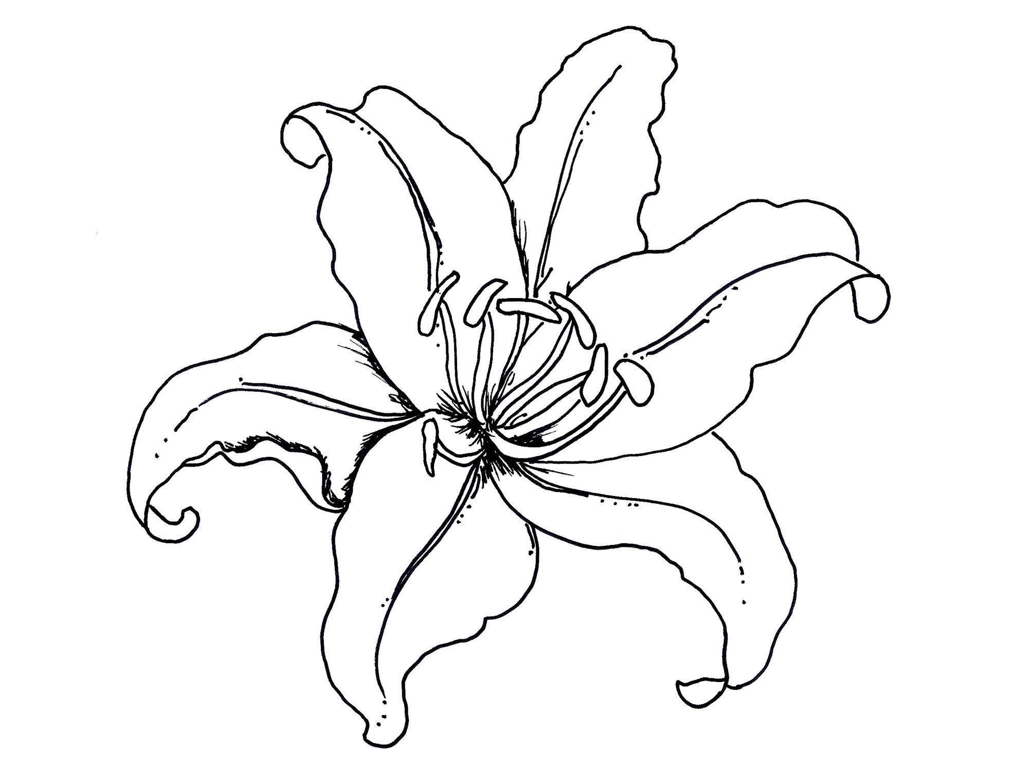 Flower Coloring Pages Tropical