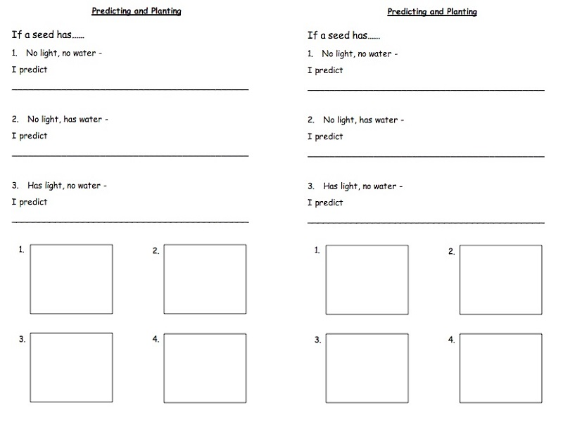 Ks1 Worksheets Predicting