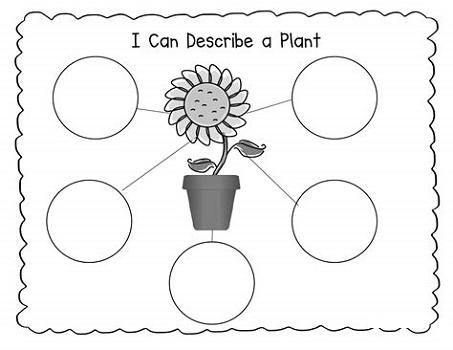 2nd Grade Worksheet Science