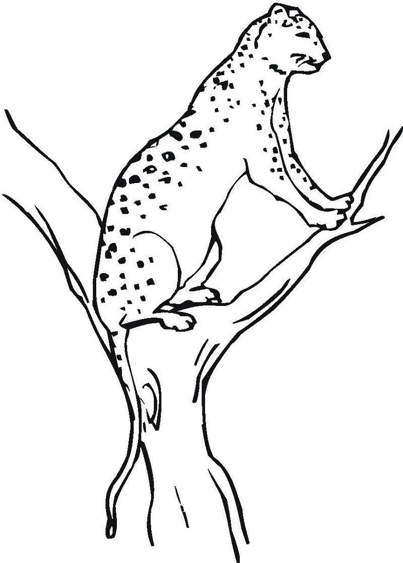 Cheetah Coloring Pages Free