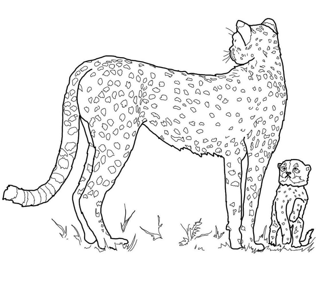 Cheetah Coloring Pages Girls