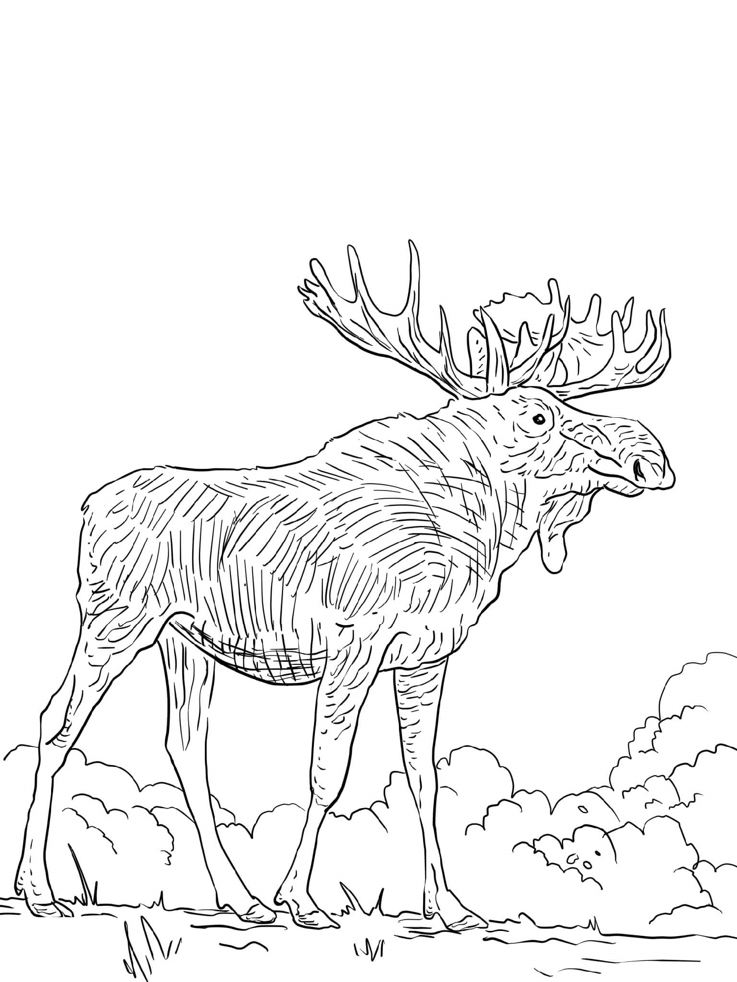 Elk Coloring Pages For Adults
