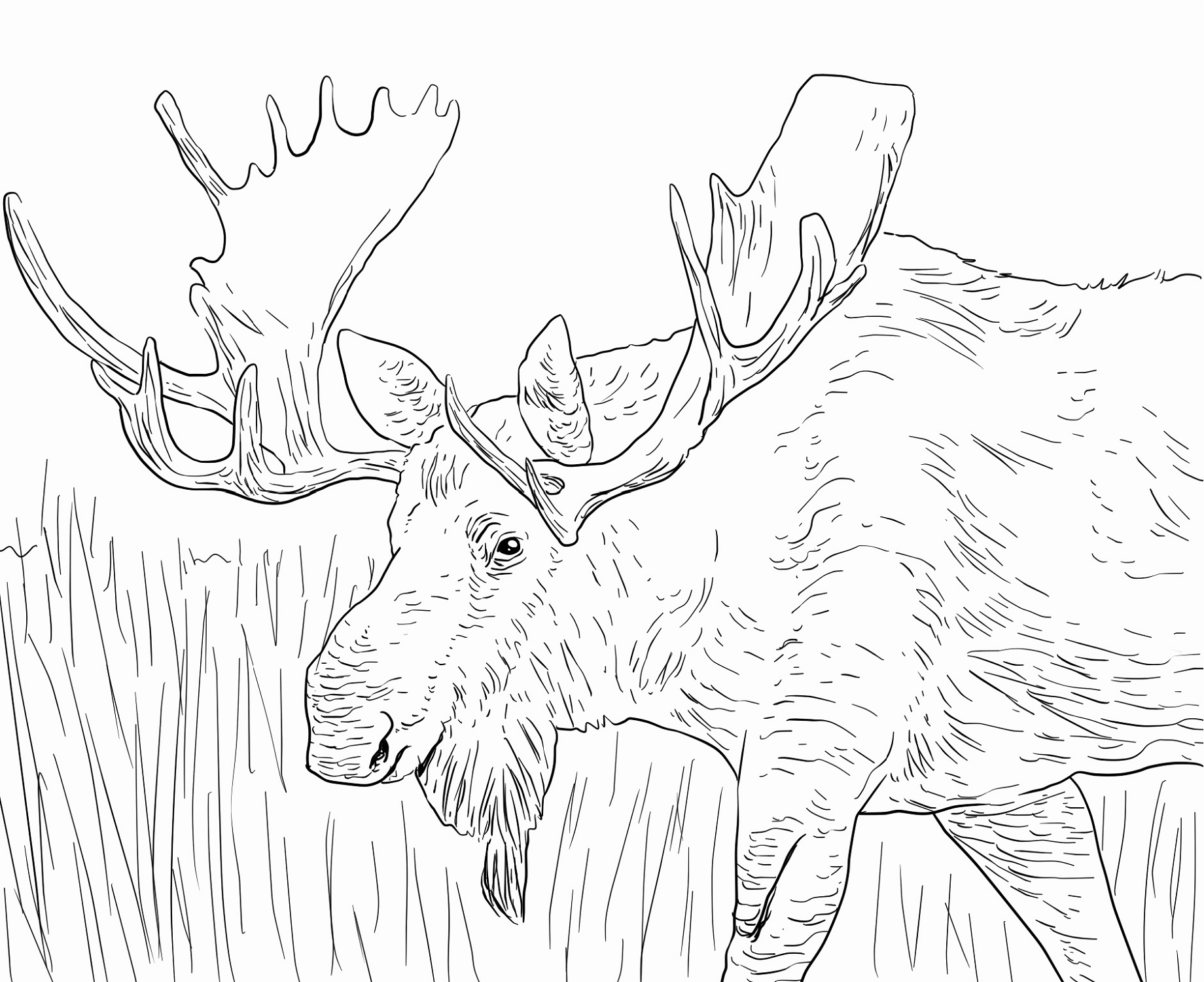 Elk Coloring Pages Printable