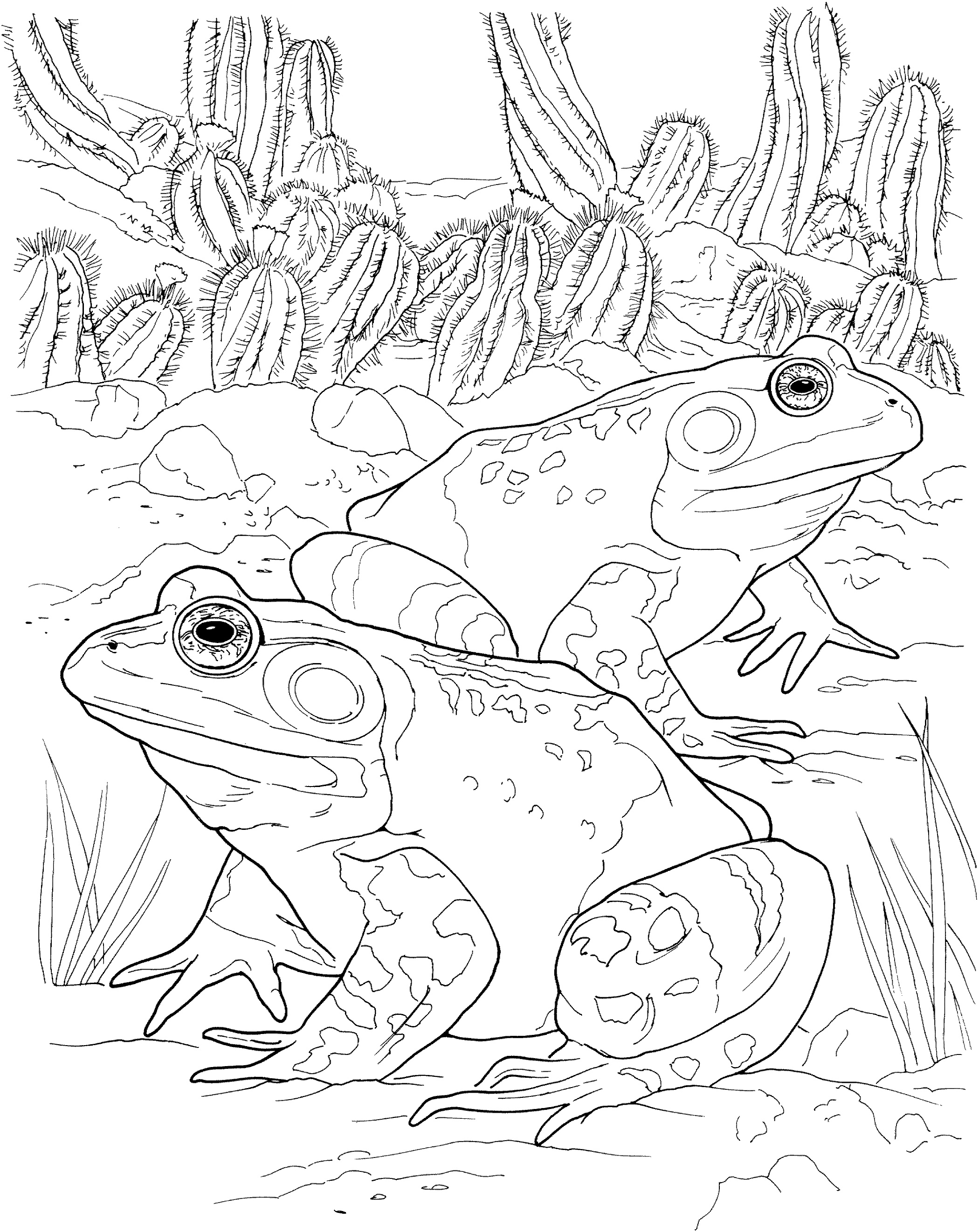 Frog Coloring Pages For Adults