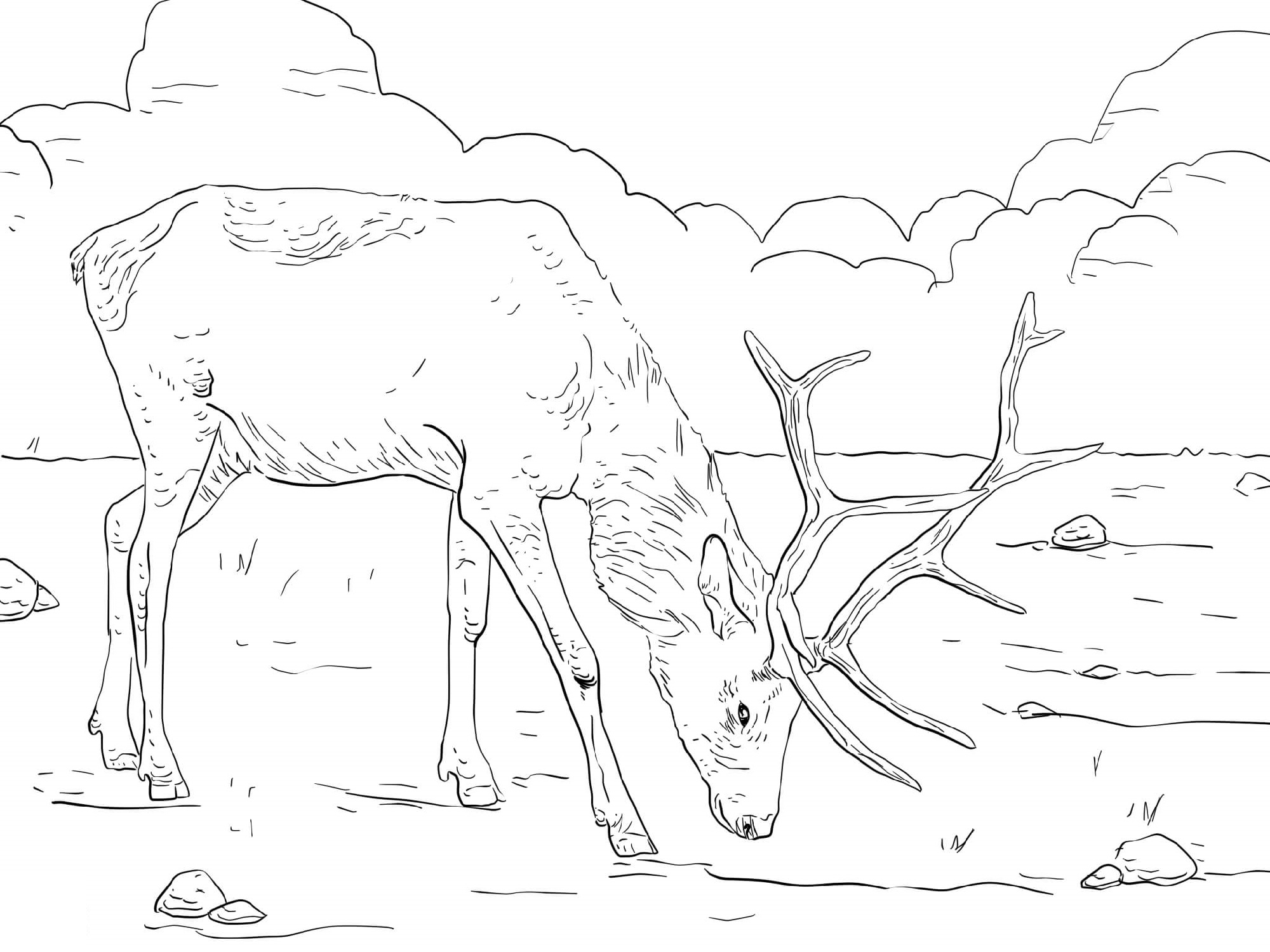 Manitobian Elk Coloring Pages