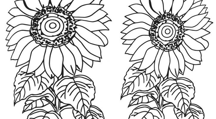 Sunflower Coloring Page Printable