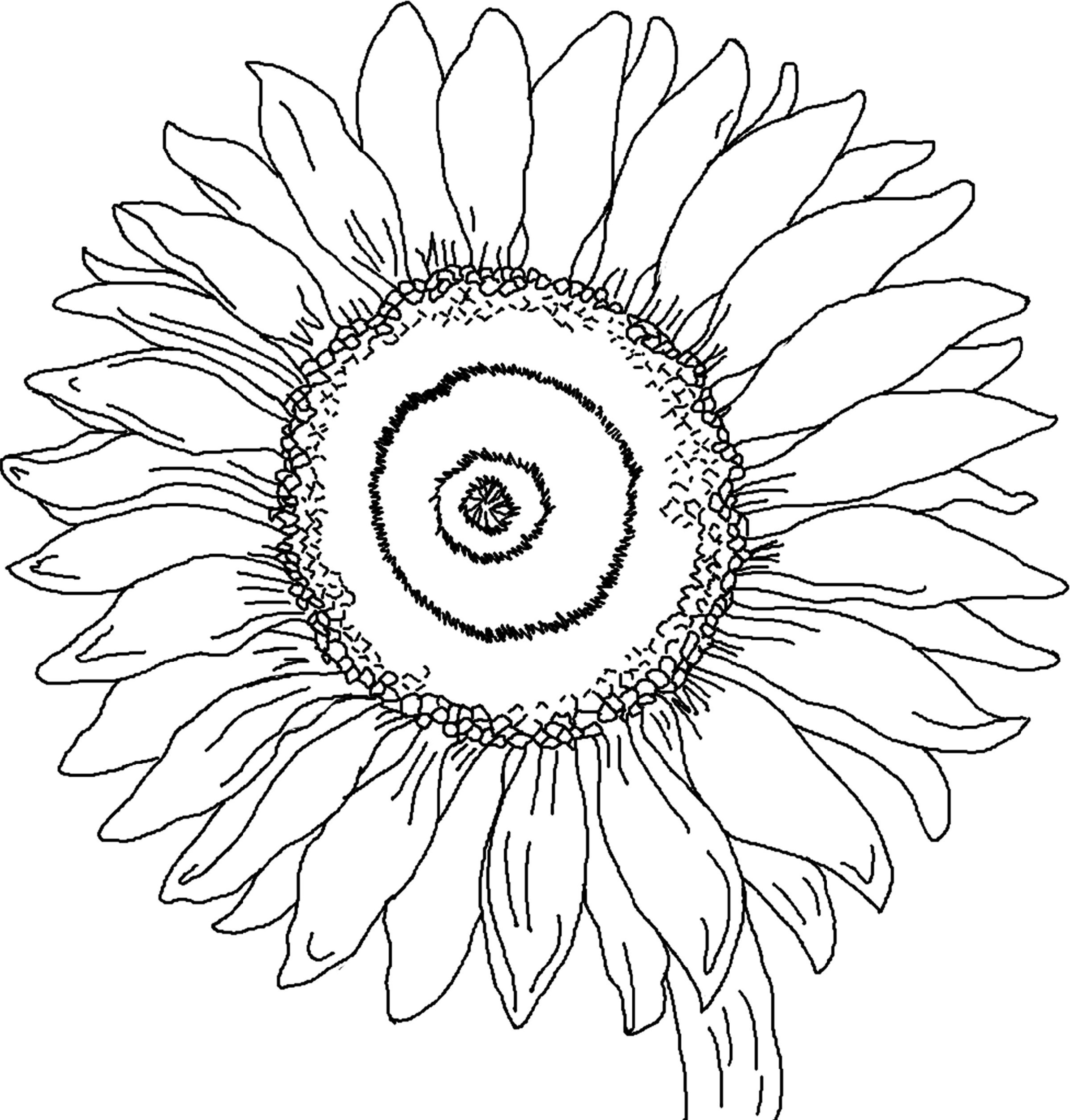 Sunflower Coloring Page To Print