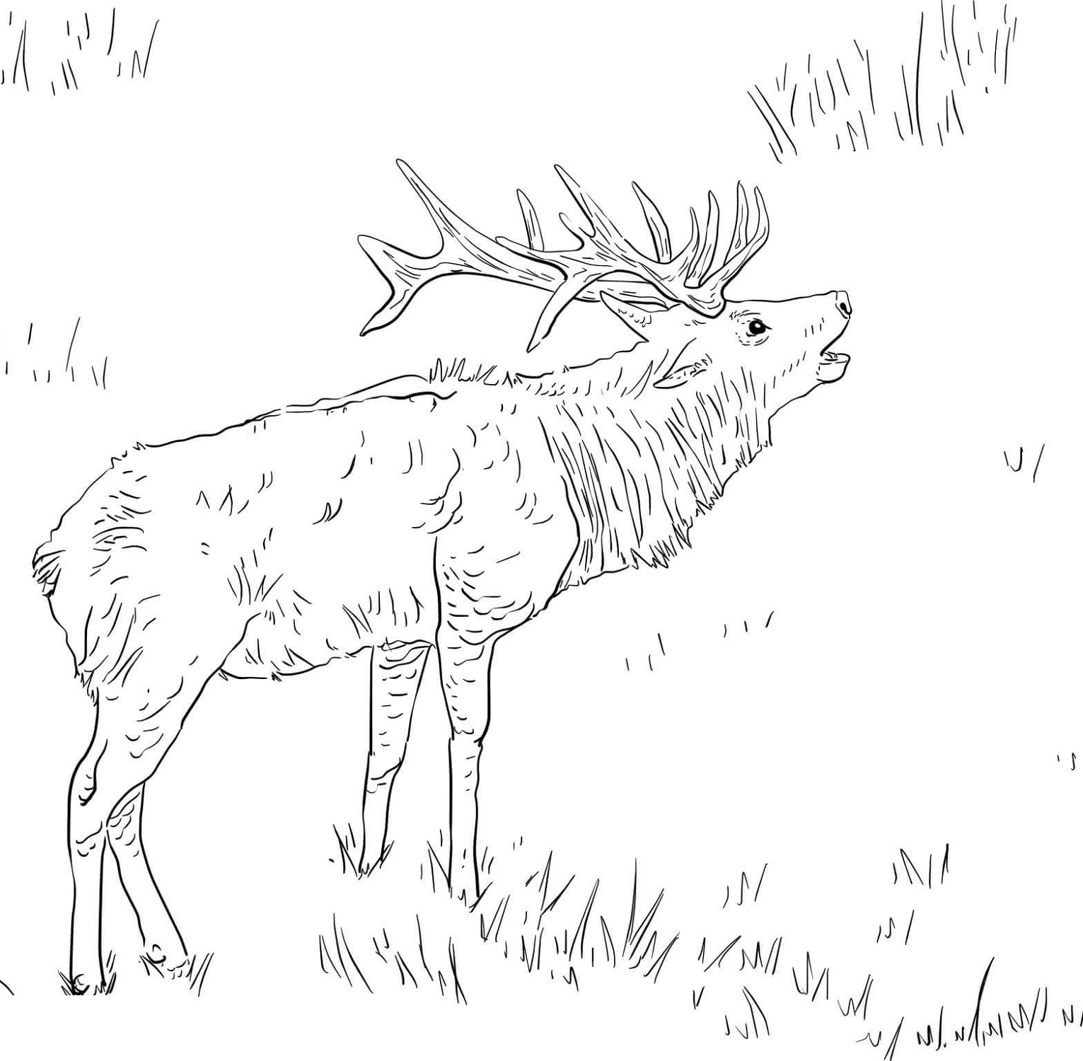 Tule Elk Coloring Pages