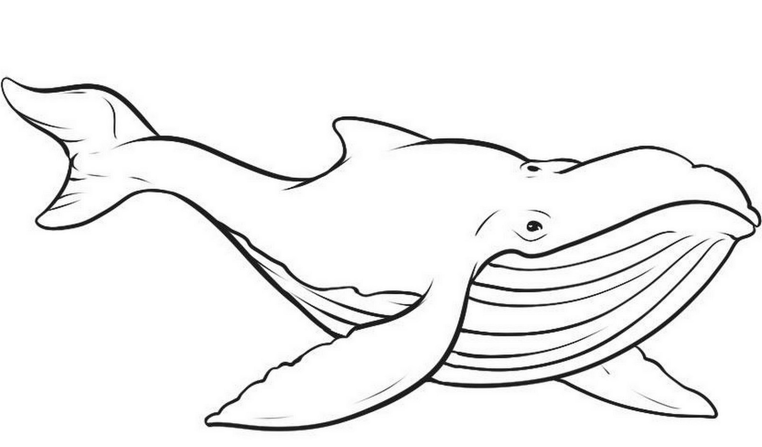 Whale Coloring Pages Printable