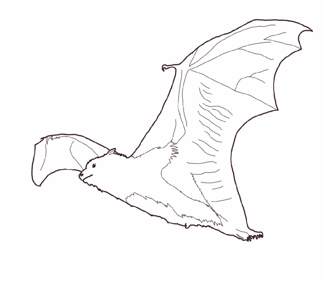 Bat Coloring Pages Flying