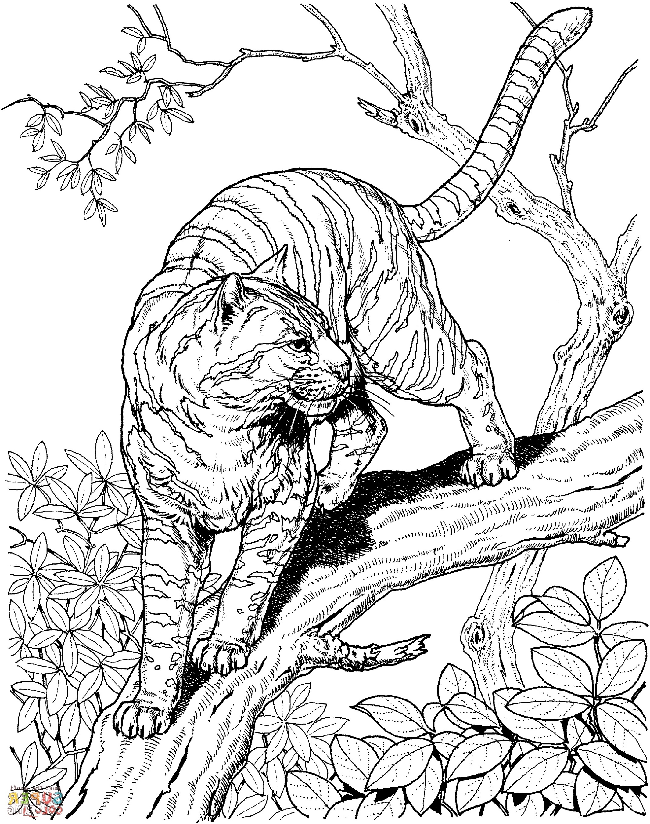 Coloring Book For Adult Free Tiger