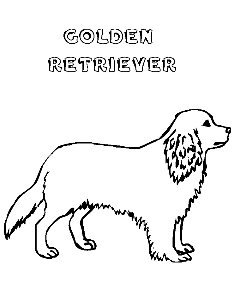 Golden Retriever Coloring Page For Kids
