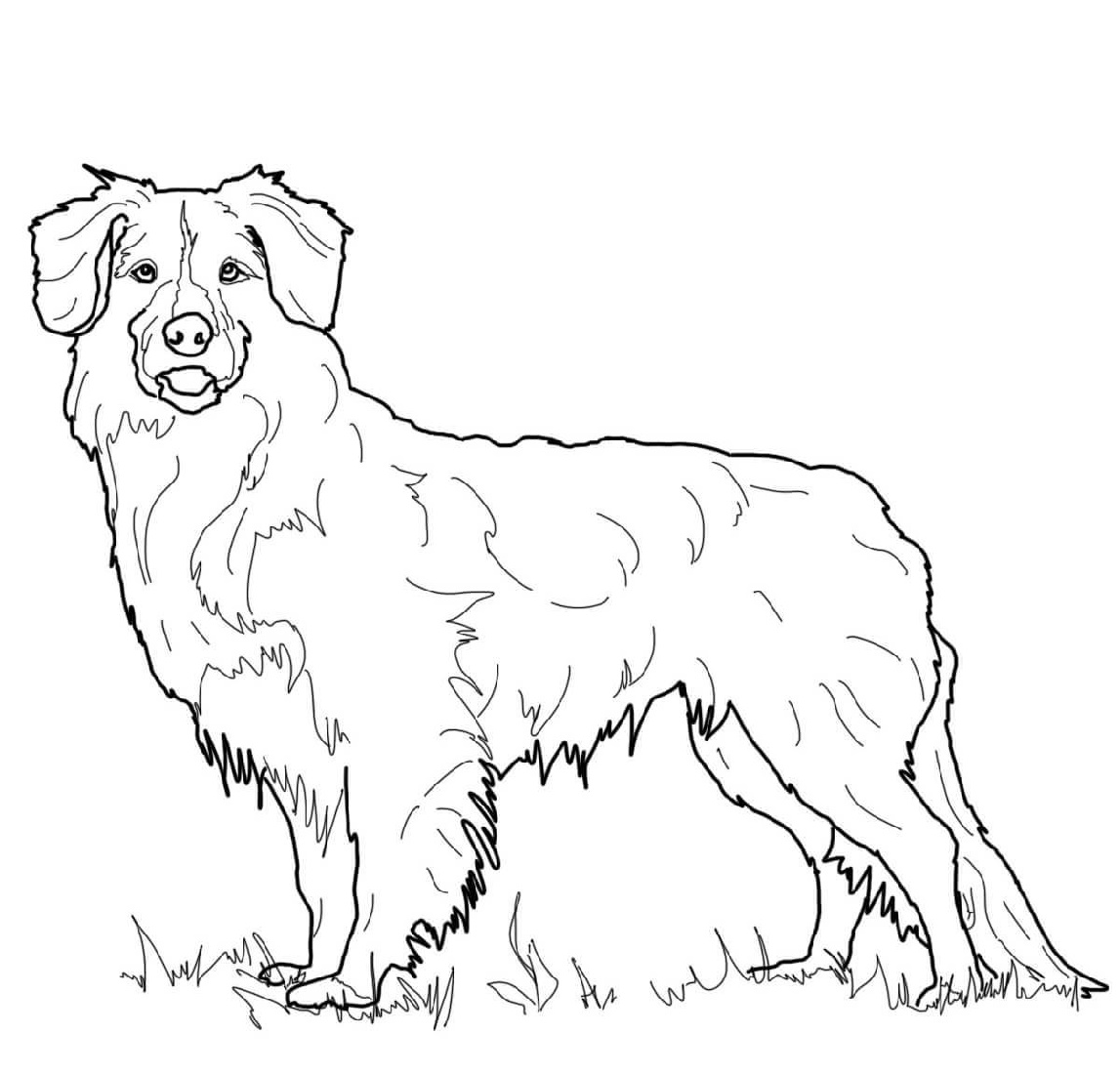 Golden Retriever Coloring Page Printable