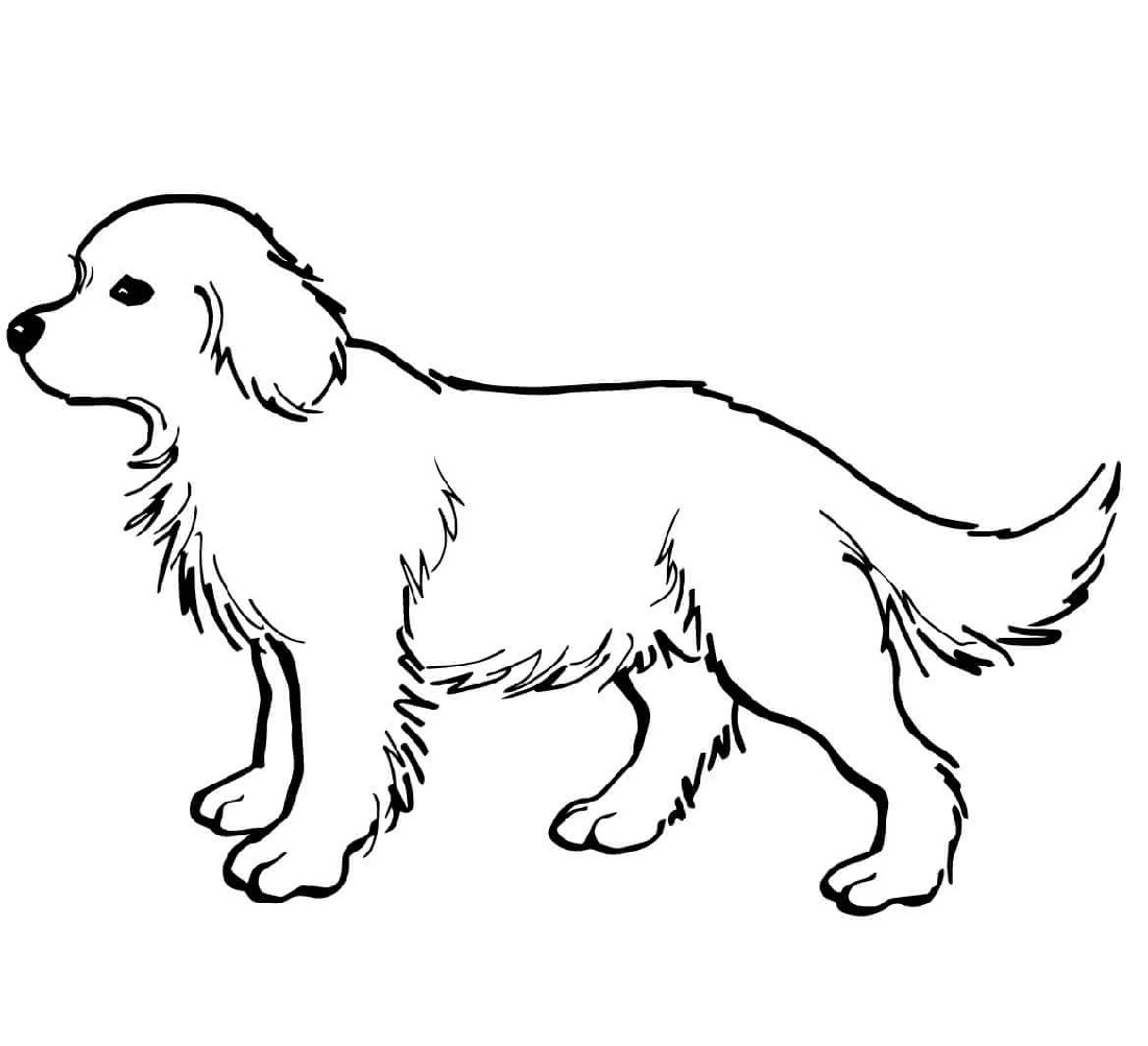Golden Retriever Coloring Page Puppy