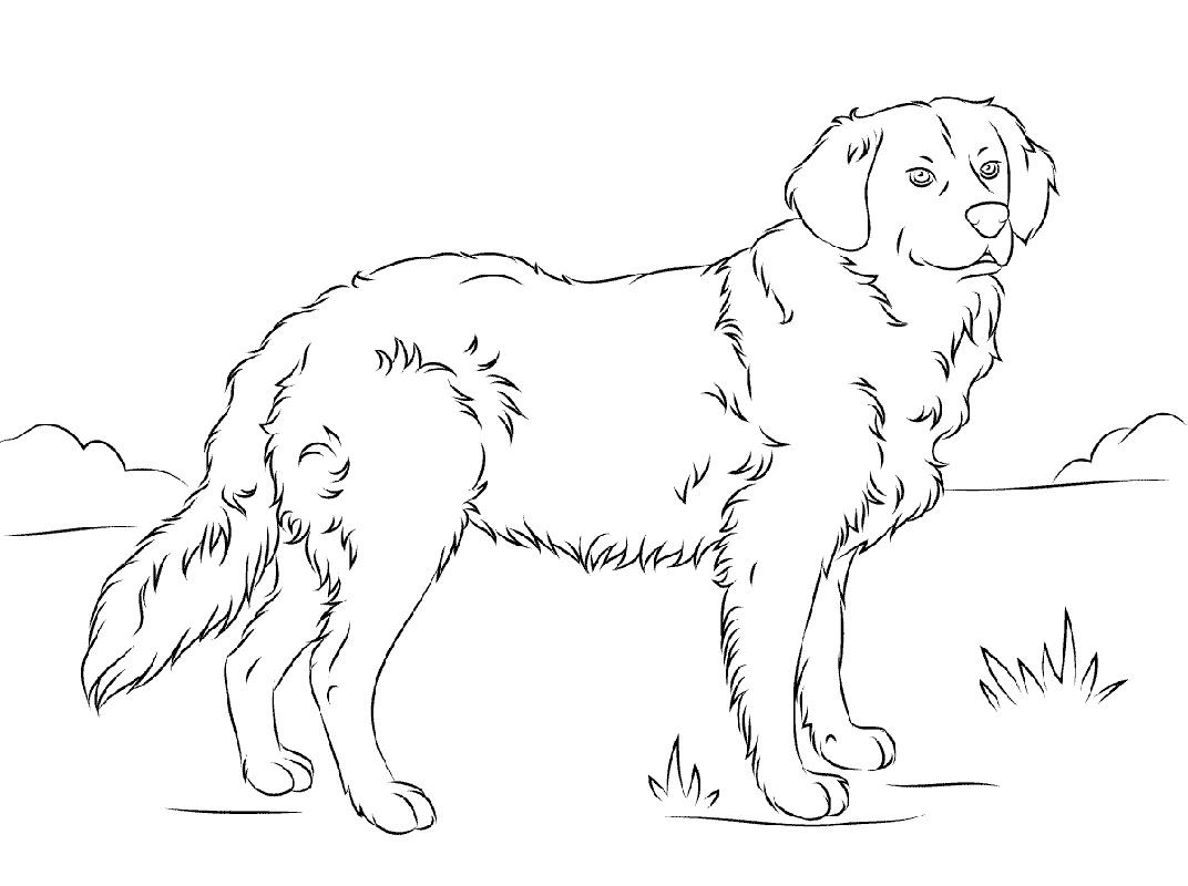 Golden Retriever Coloring Page K5 Worksheets