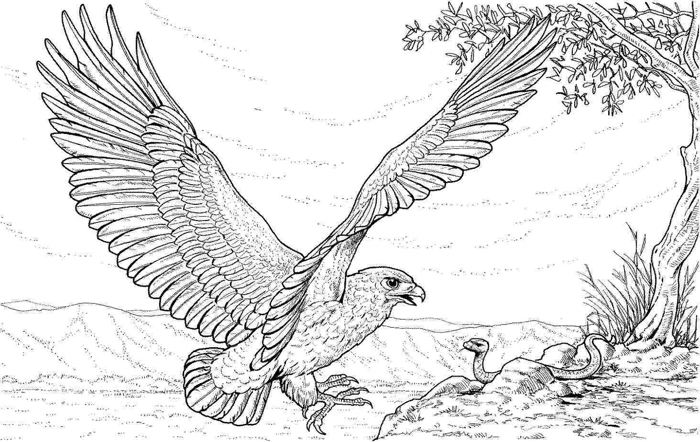 Hard Coloring Pages Of Animals Eagle