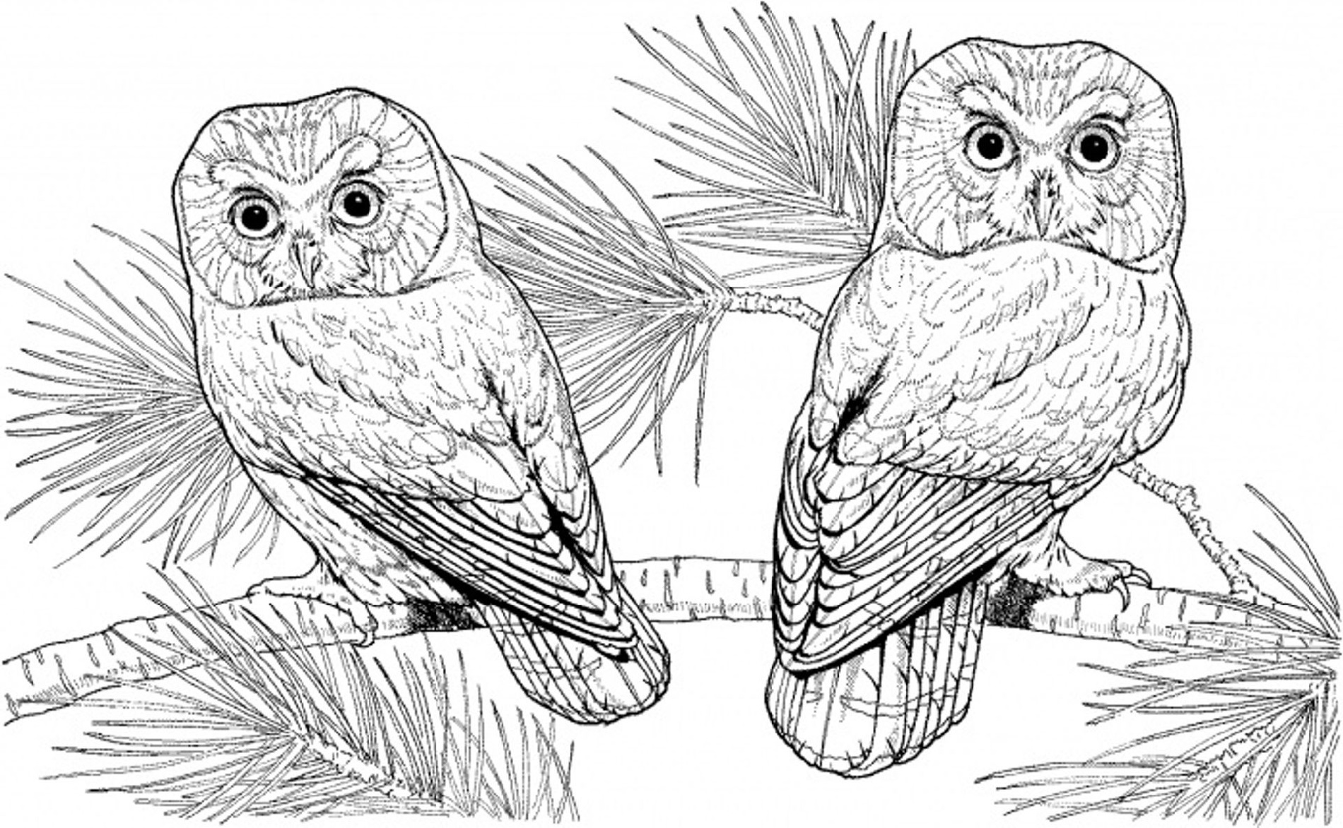 Hard Coloring Pages Of Animals Owl