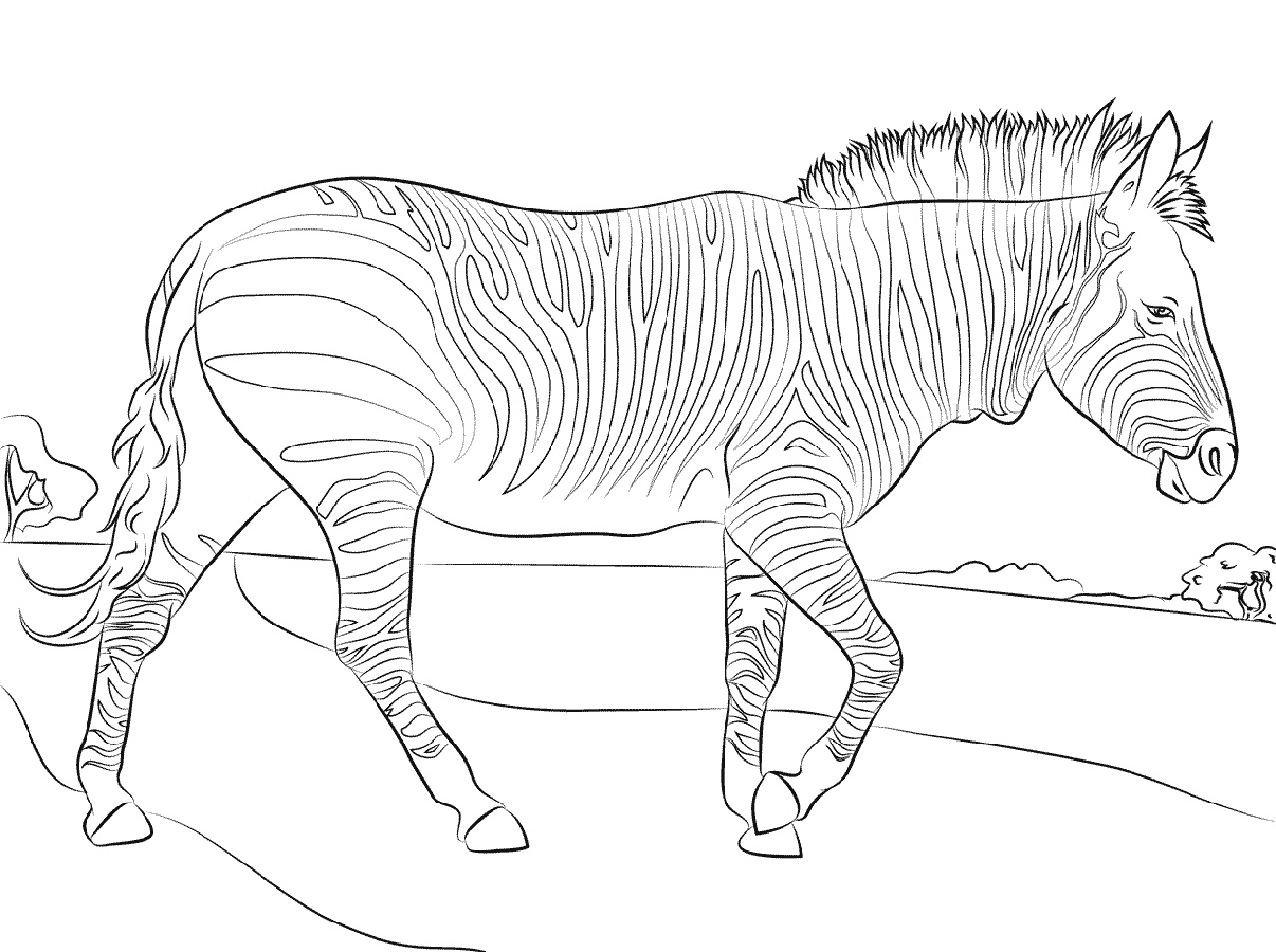 Mountain Zebra Coloring Pages