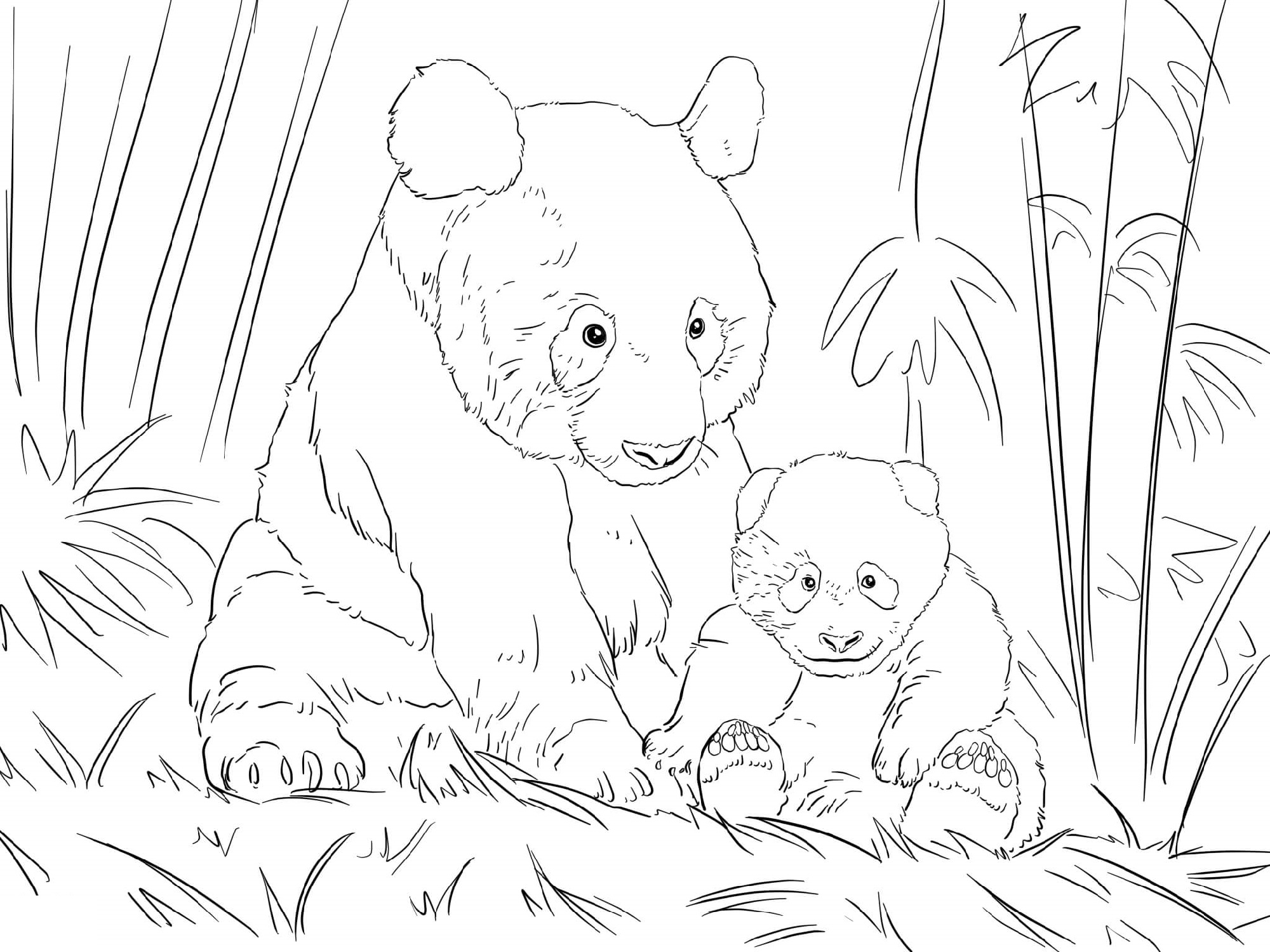 Panda Coloring Pages Family