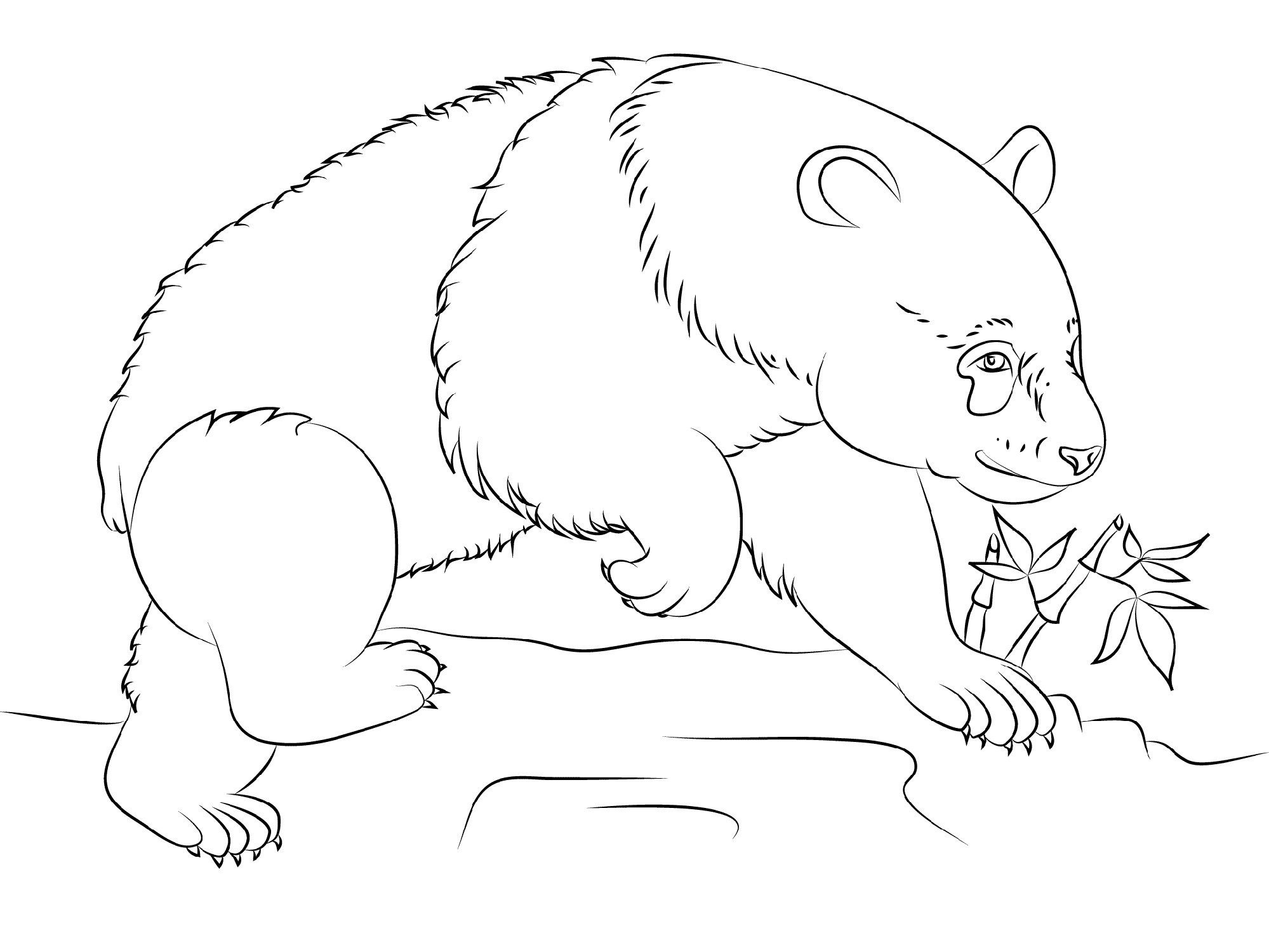 Panda Coloring Pages Printable
