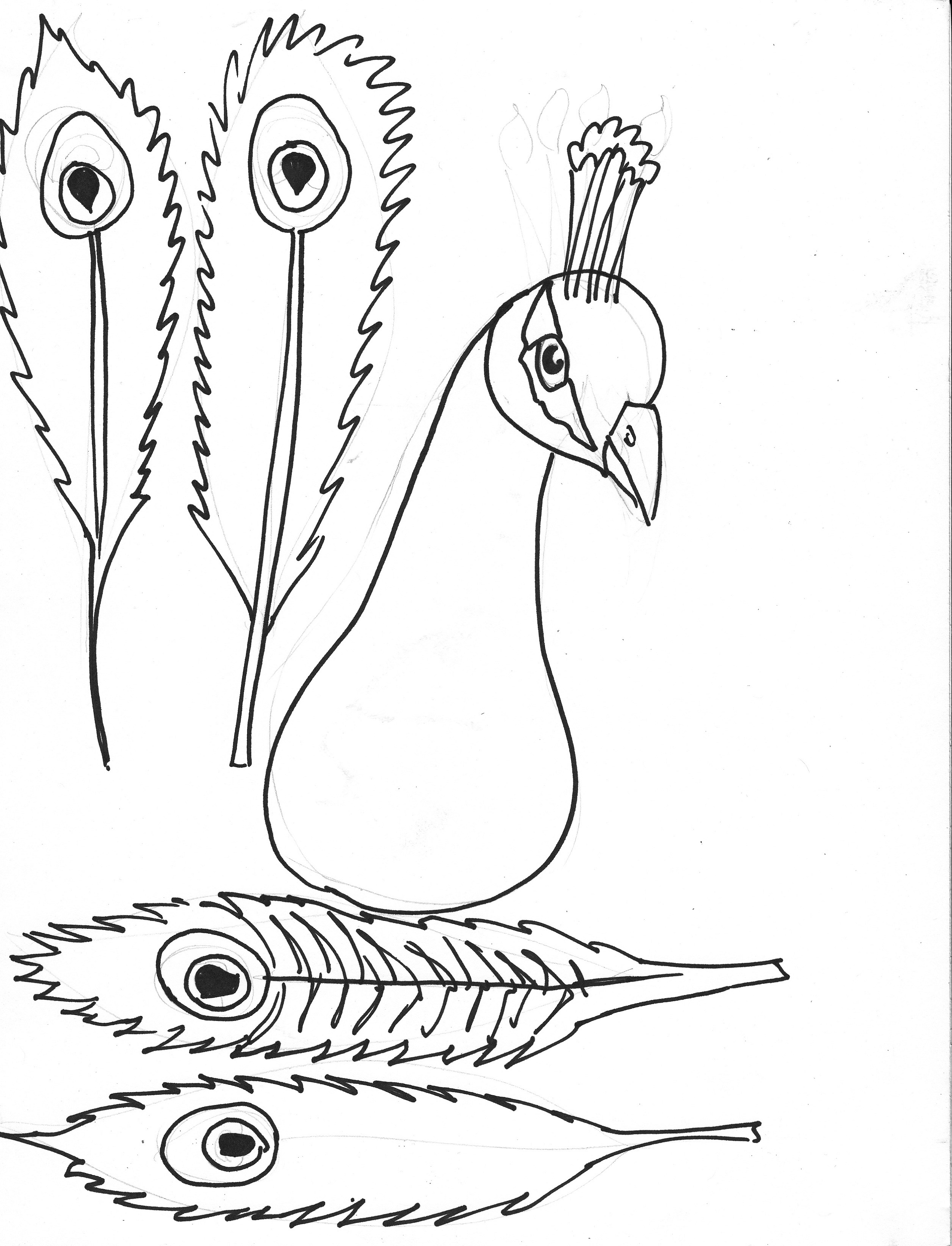 Peacock Coloring Pages Feather