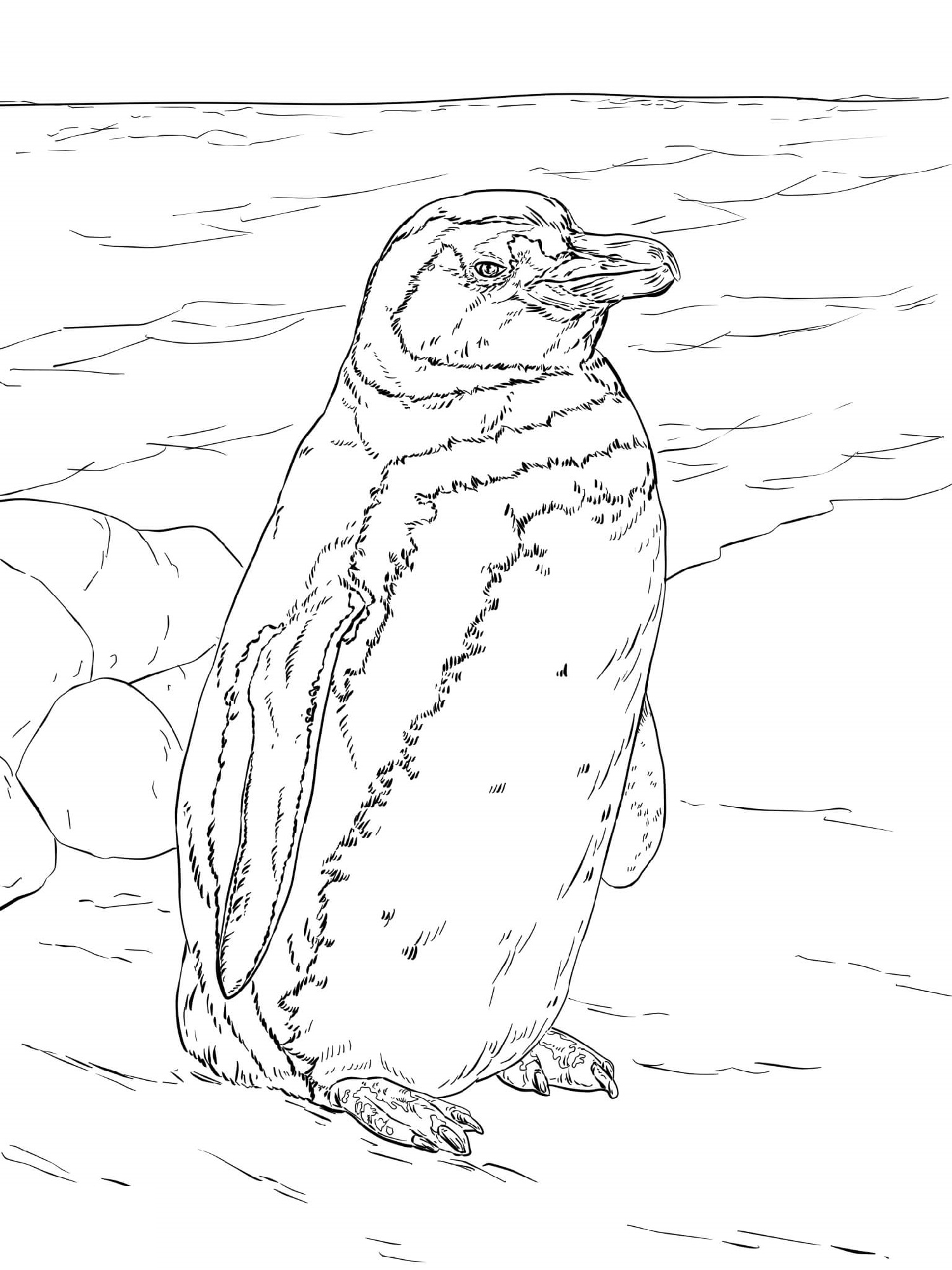 Penguin Coloring Pages Realistic