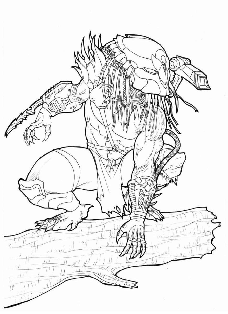 Predator Coloring Pages Owl