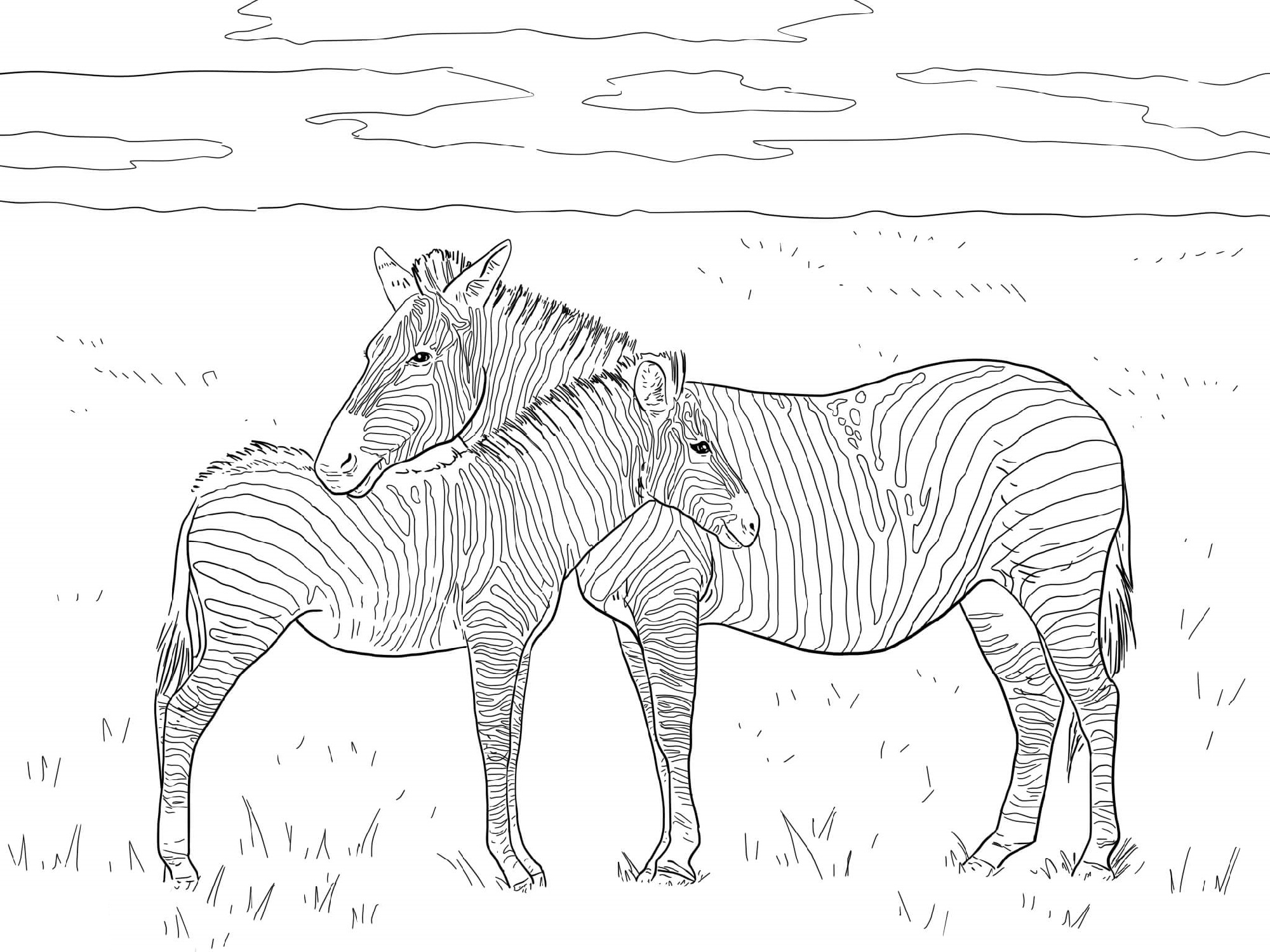 Zebra Coloring Pages For Adults
