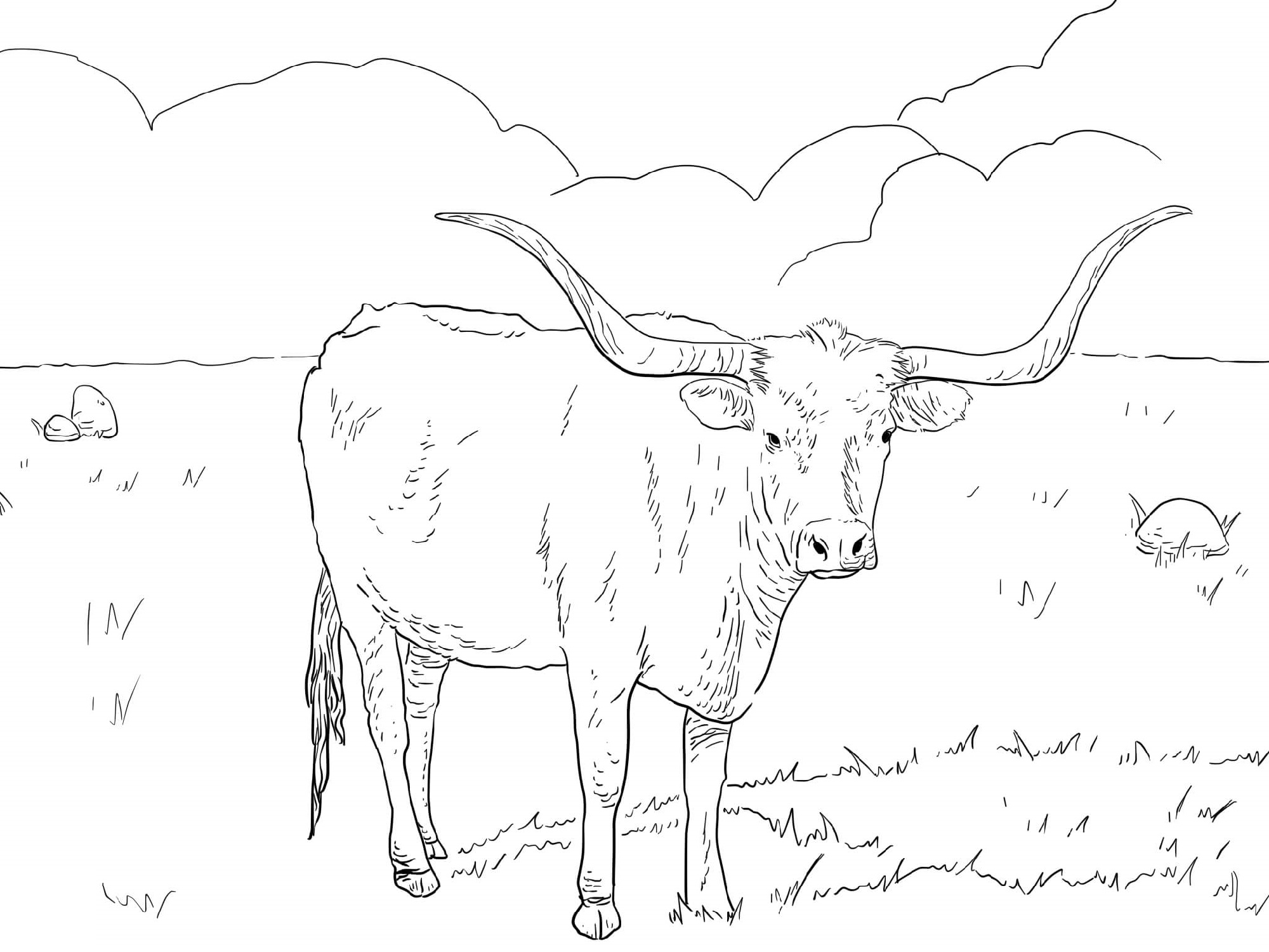 Cow Coloring Pages For Adults