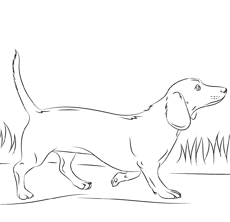 Dachshund Coloring Pages Dog