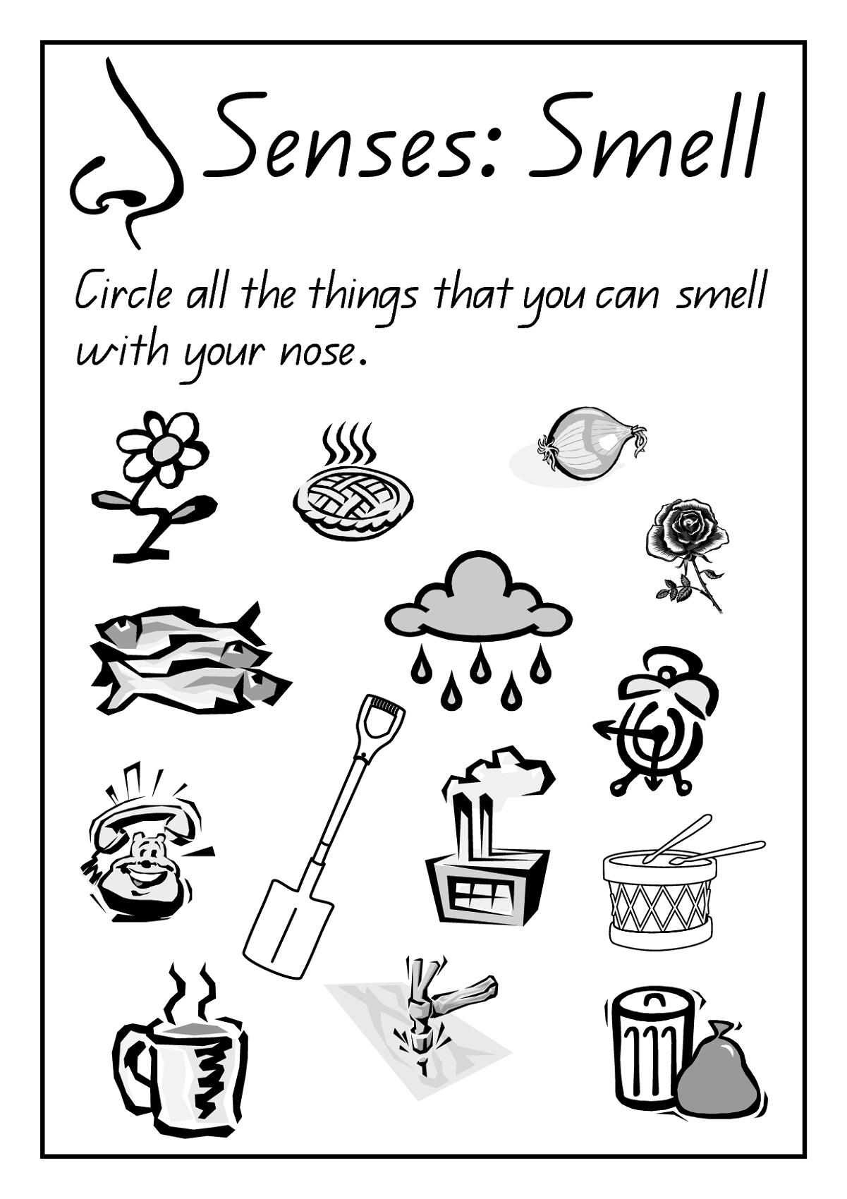 Free Science Worksheets Senses