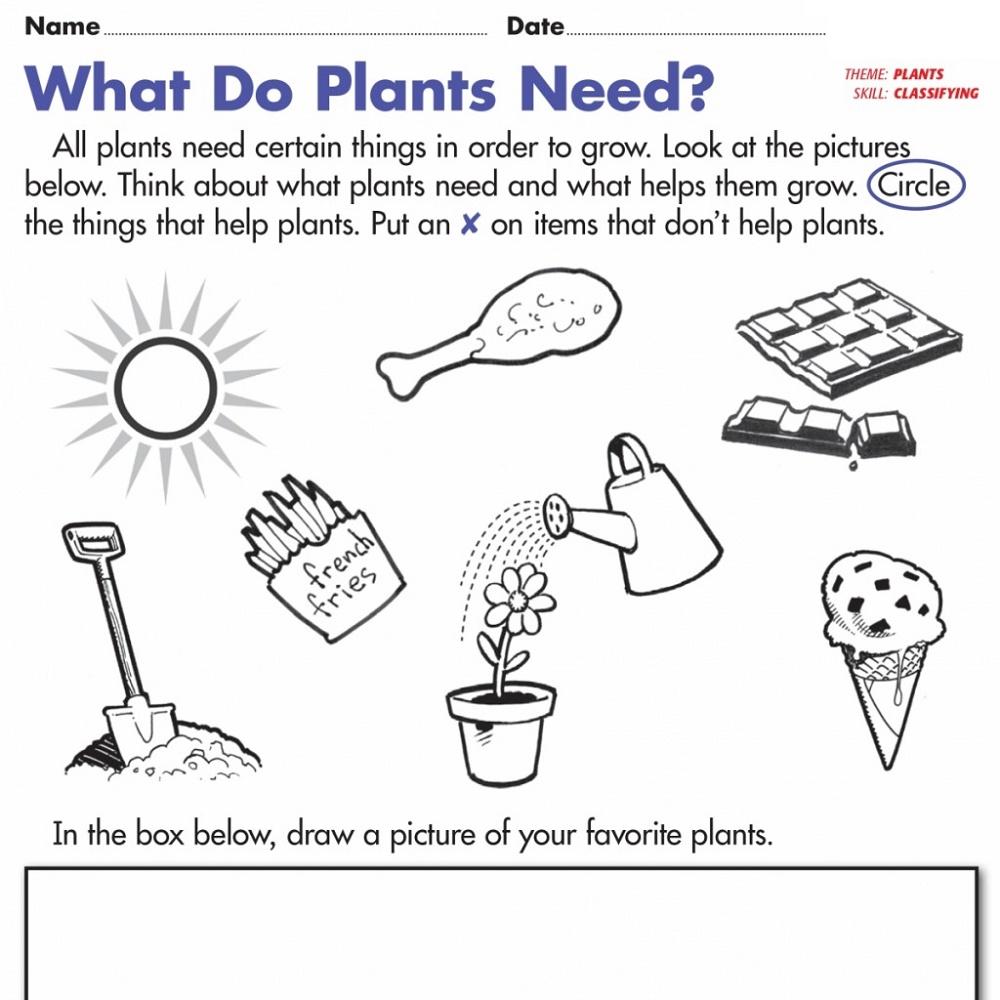 Free Science Worksheets for Kindergarten