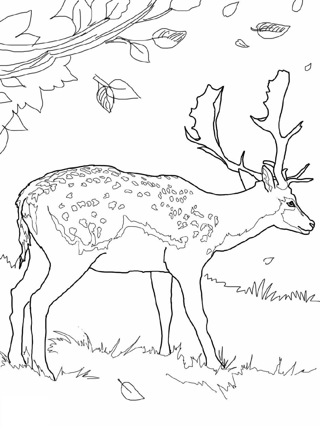 Deer Coloring Pages Free