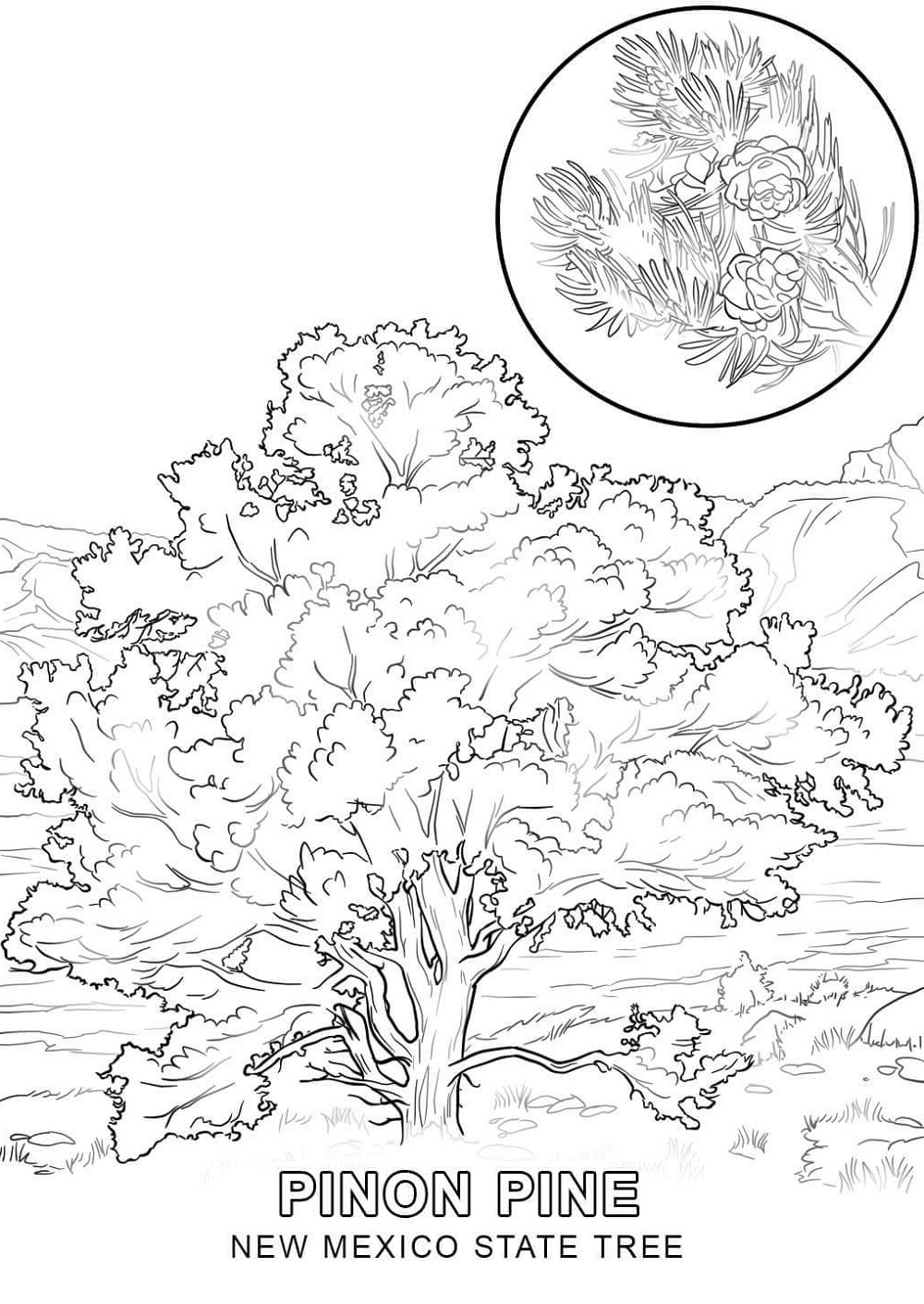 New Mexico State Tree Coloring Pages