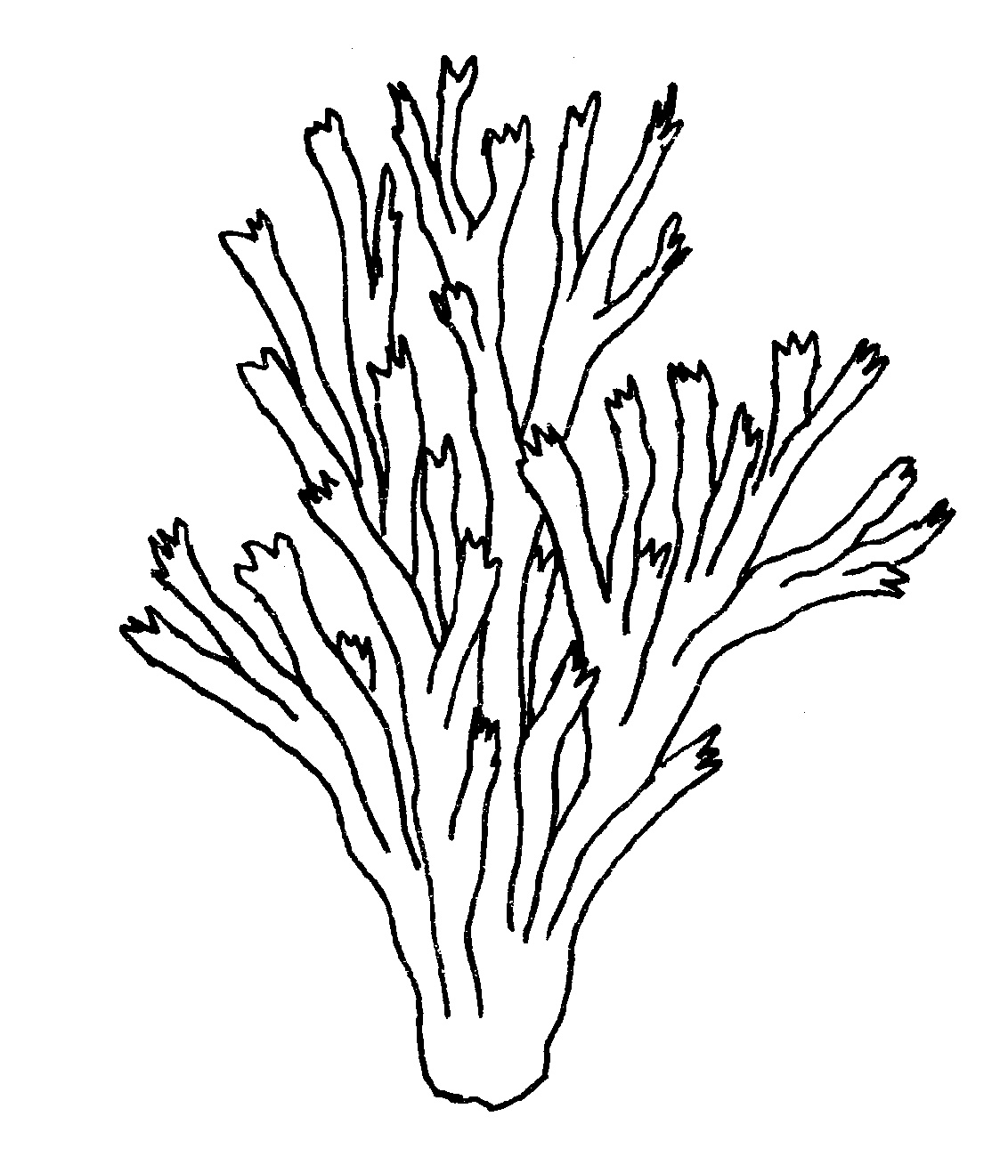 Seaweed Coloring Pages For Kids