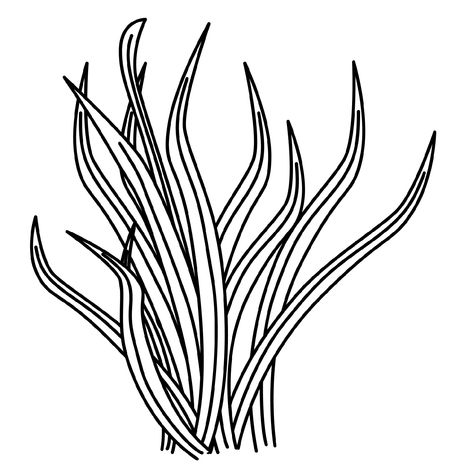 Seaweed Coloring Pages Free