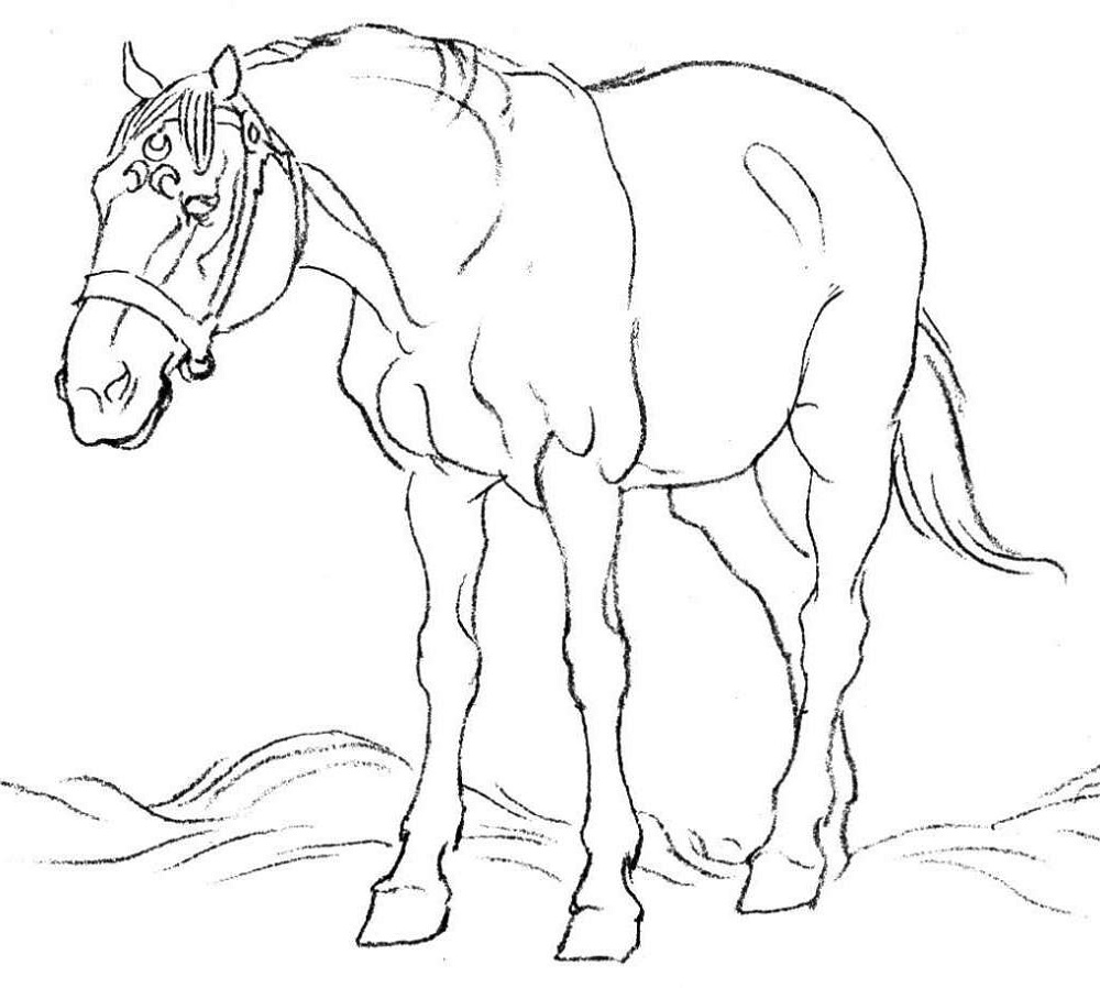 Adult Coloring Book Pages Horse