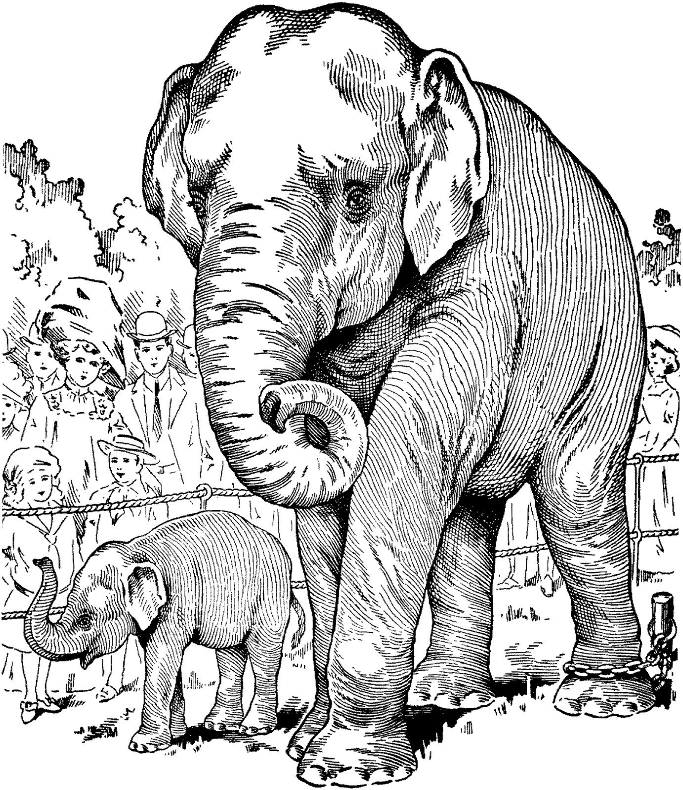 Animal Coloring Books For Adults Elephant