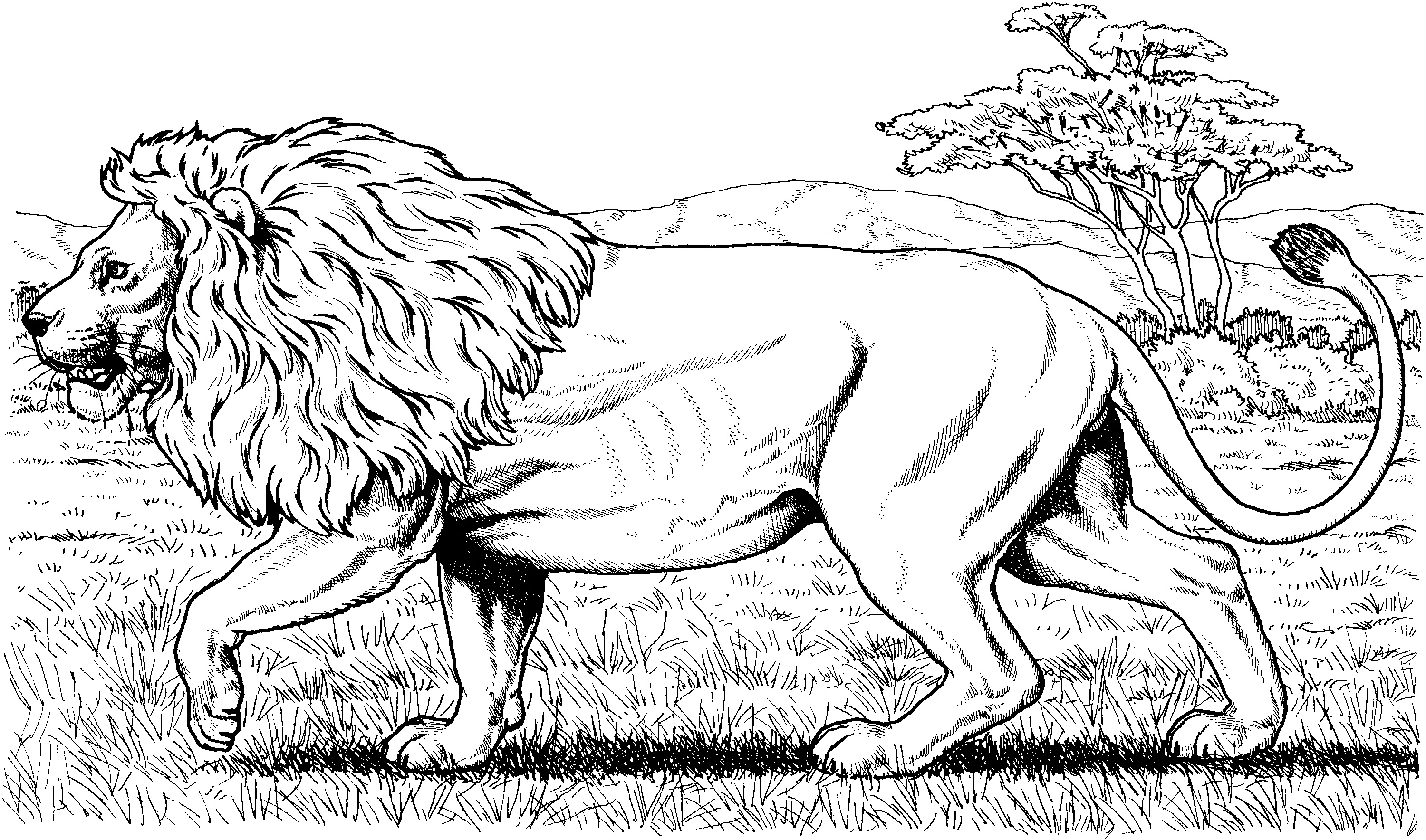 Animal Coloring Books For Adults Lion