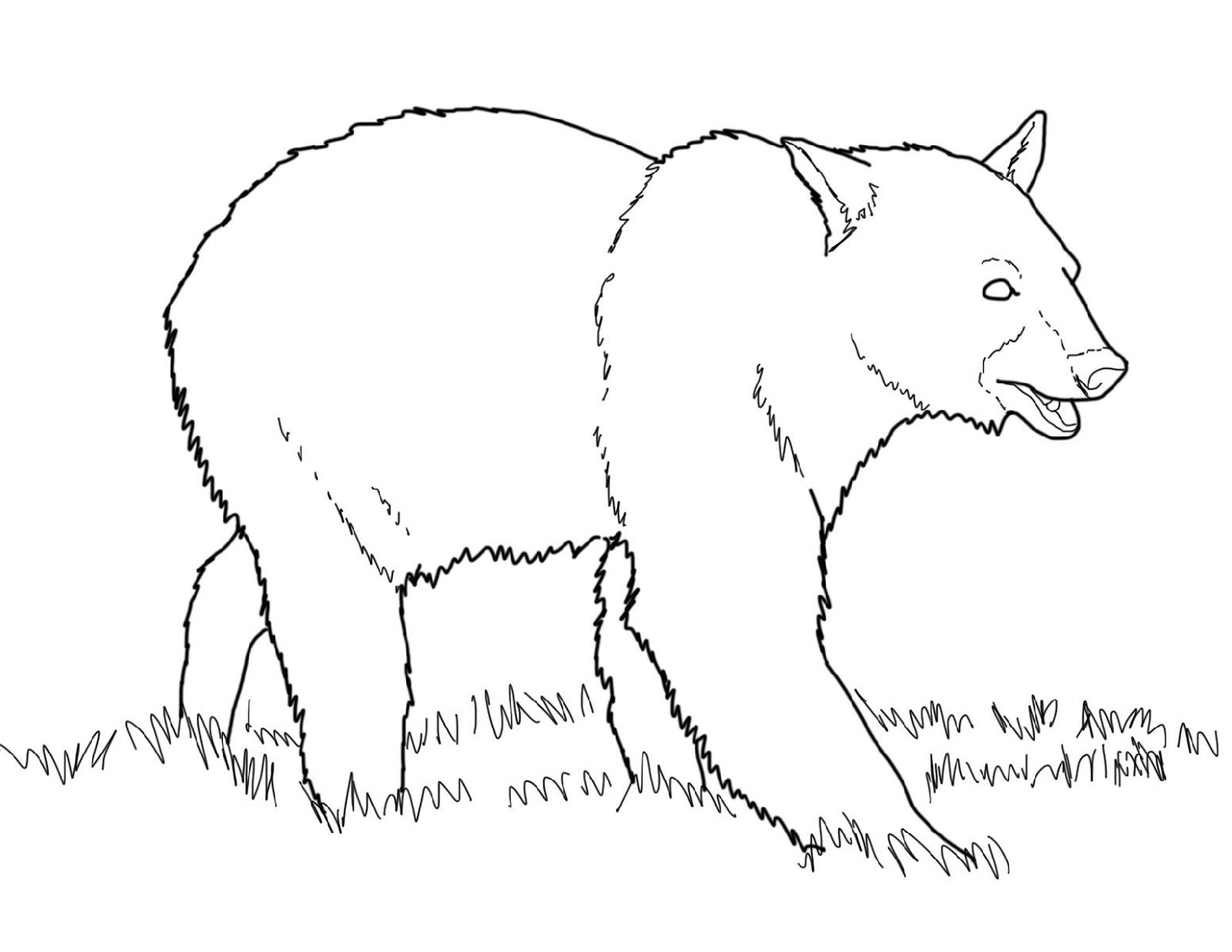 Bear Coloring Pages Free