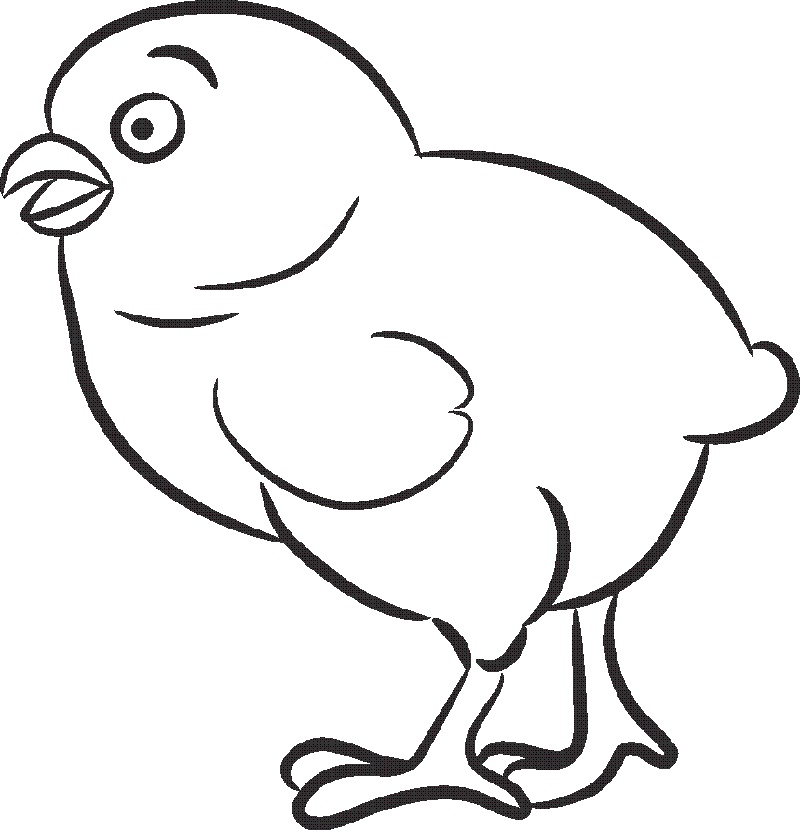 Cute Baby Animal Coloring Pages Chick