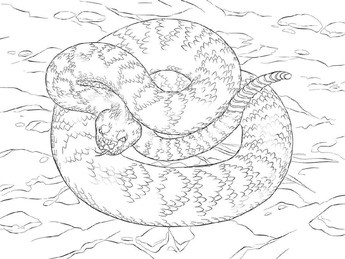 Eastern Diamondback Rattlesnake Coloring Page