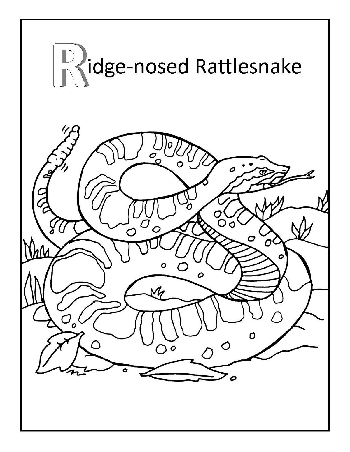 Rattlesnake Coloring Page Printable