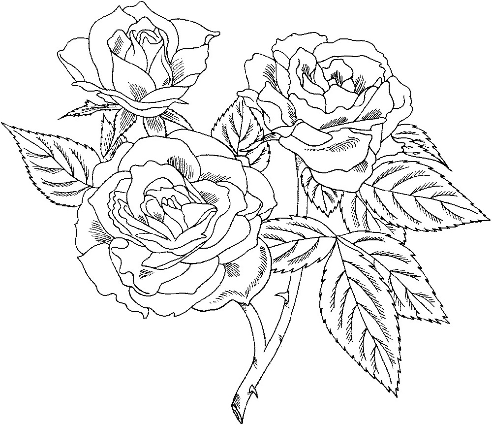 Rose Coloring Pages Flower